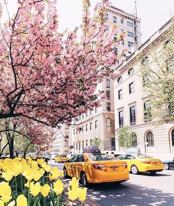 NYC is Beautiful this Time of Year! Shop Our New Collection Now and Enjoy Free Shipping. 🌸 . . . . . . . . . #ClothandTrim #WomensFashion #WomensFashionPost #WomensFashionReview #Womenswear #WomensWearDaily #WomenStyle #WomenWithStyle #ContemporaryFashion #ReadytoWear #ShopOnline #FashionGram #FashionForWomen #FashionStylist #Handbags #Style #FashionBrand #ShopNYC  #LookOfTheDay #OutfitOfTheDay #LookBook