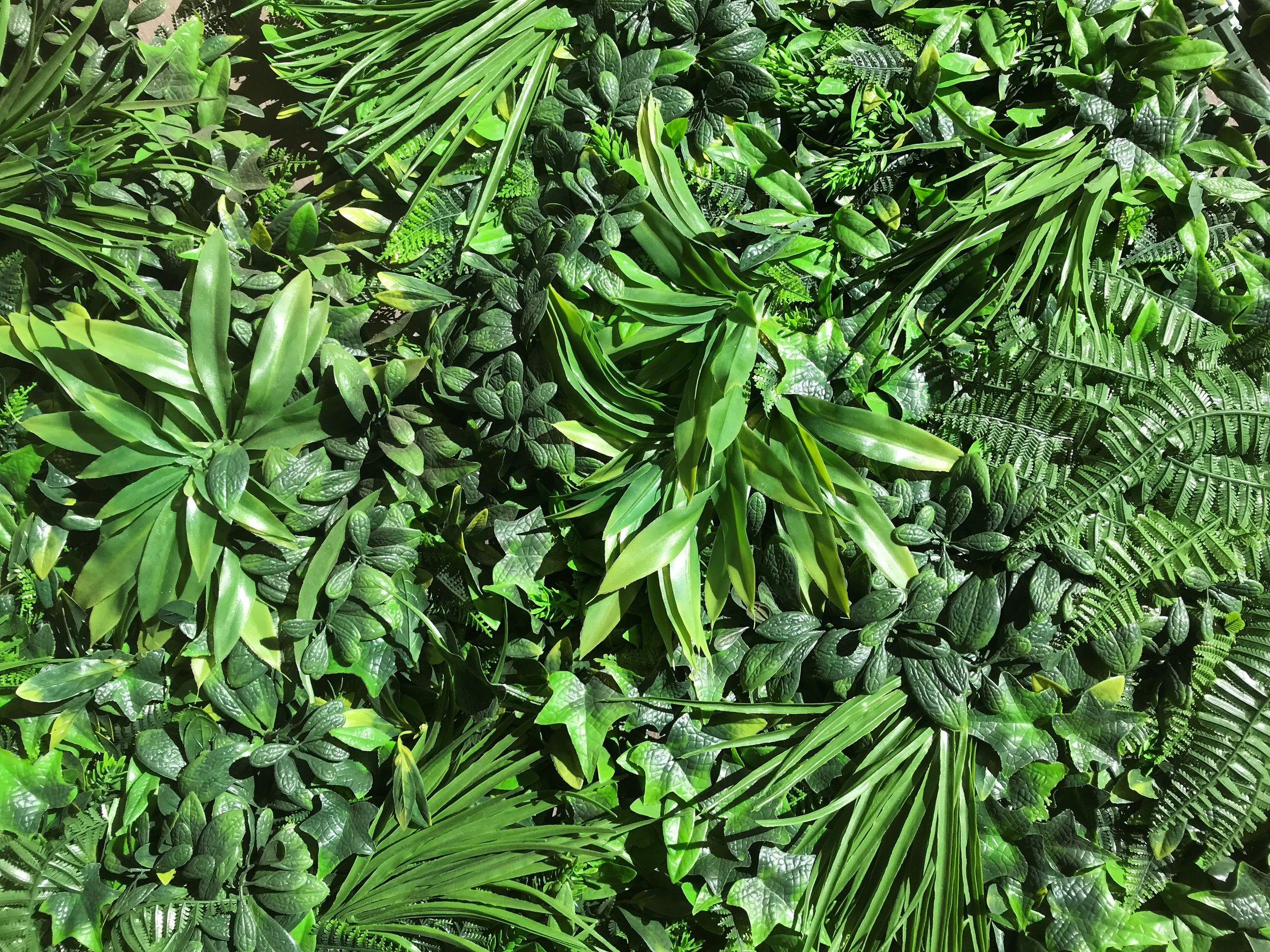 Jungle Backdrop  Price: $120.00  Qty: 1