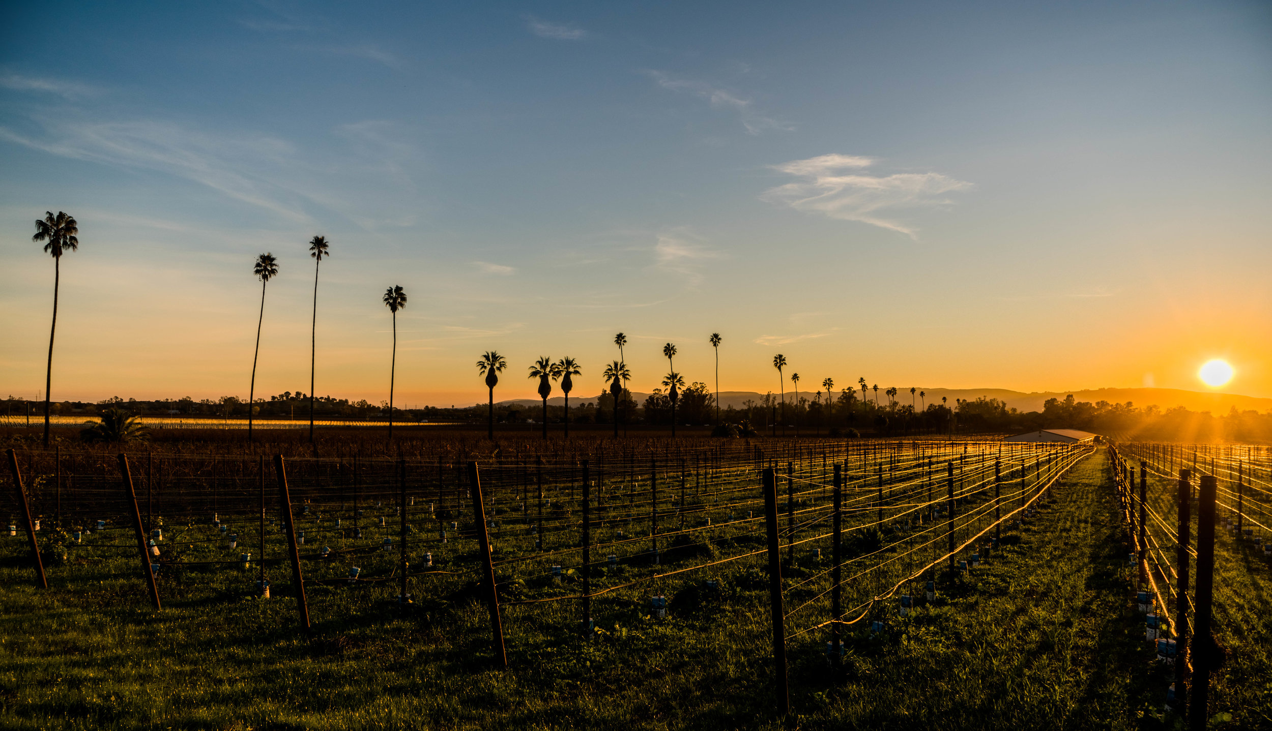 Napa Valley Wineries - Where to go, what to taste, we have a full itinerary for you!