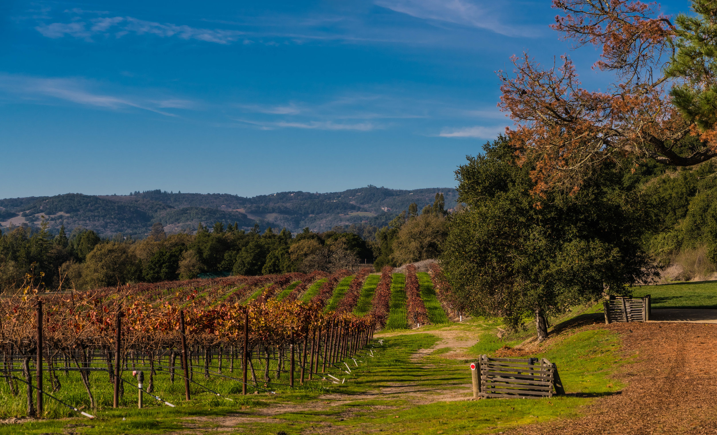 Best Wine in Sonoma County