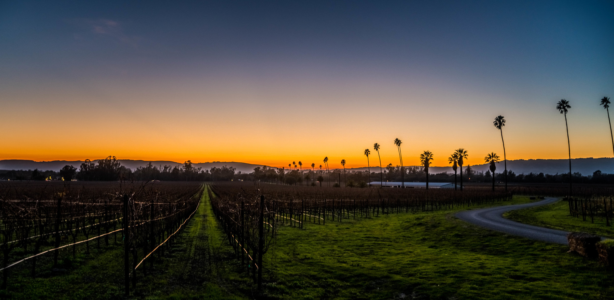 Scribe Winery - Sunset views