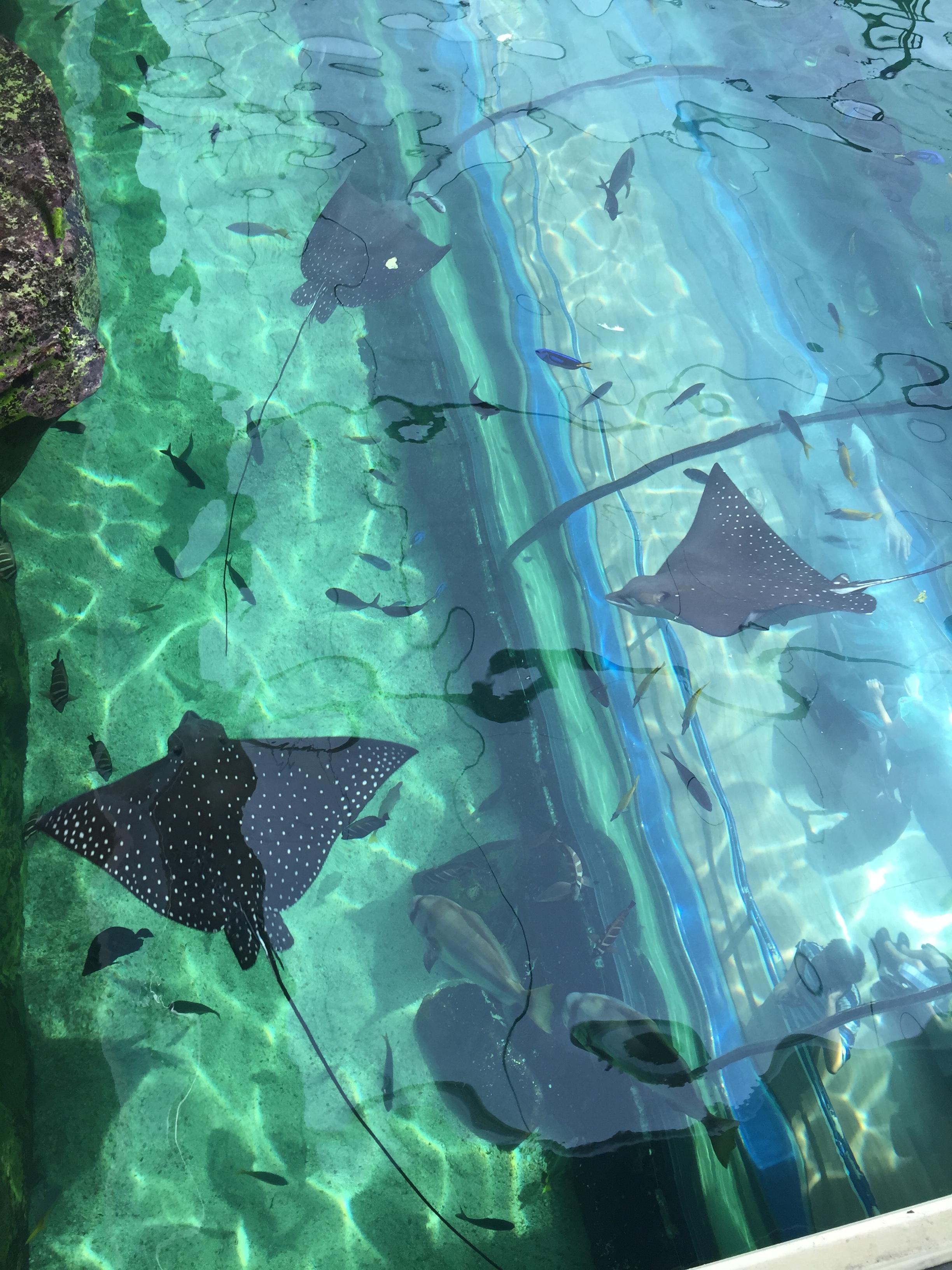 Sea Life Sydney Aquarium - Rays