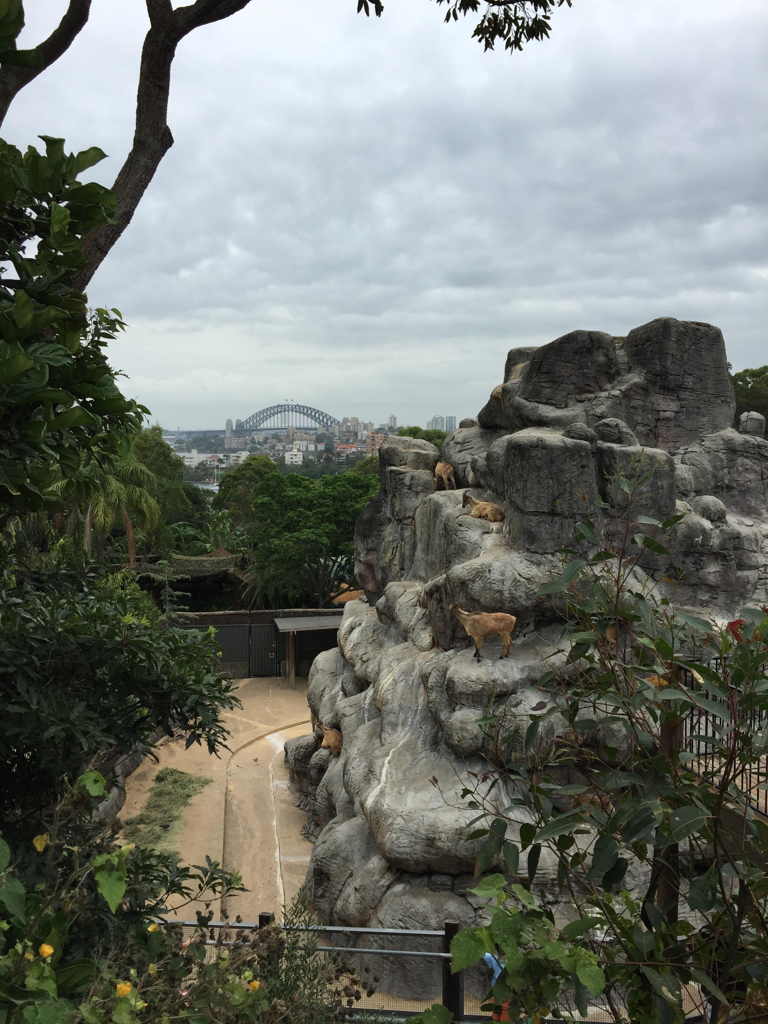 Taronga Zoo Sydney Australia - Goats and Views