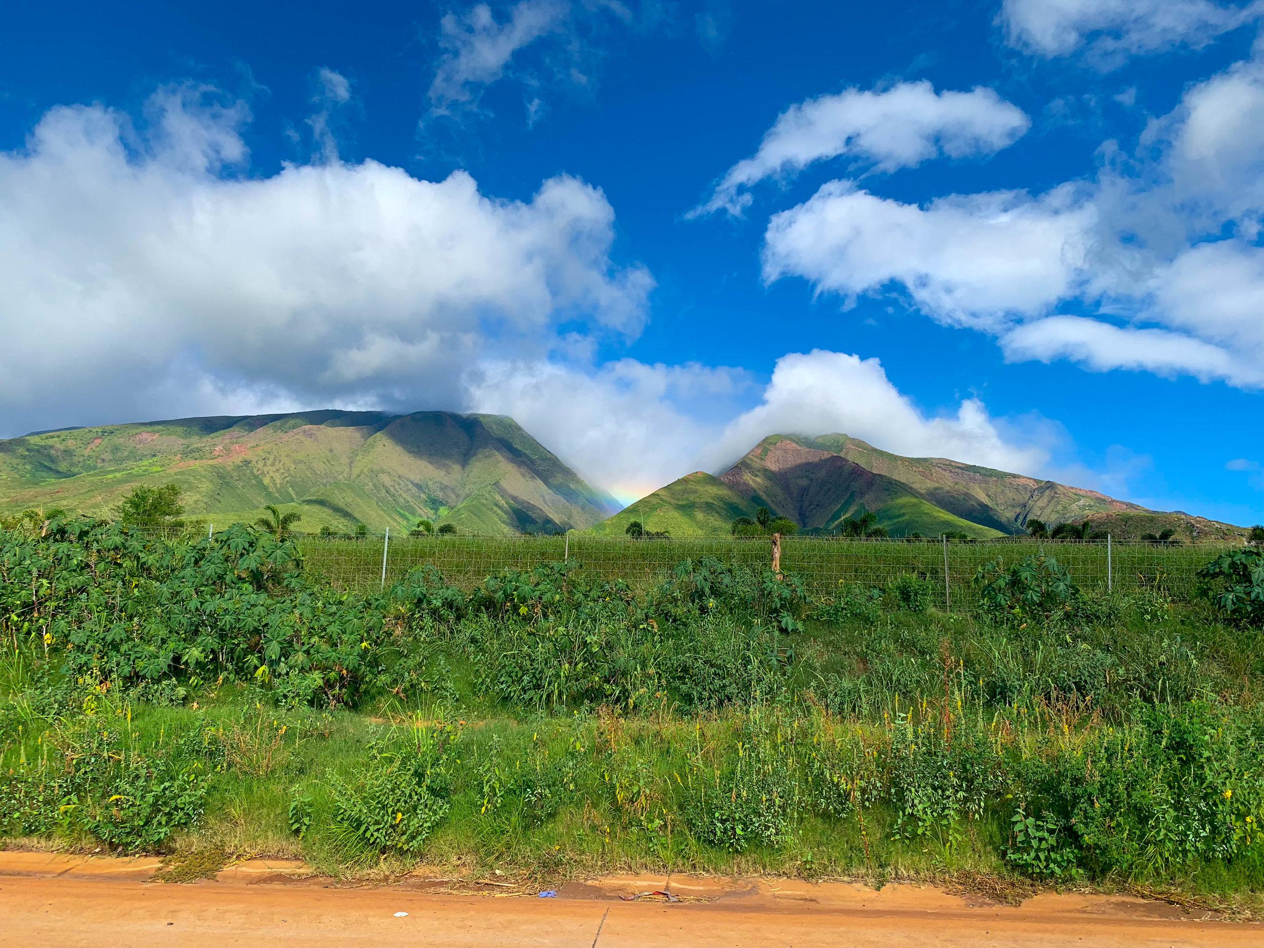 Maui Hawaii - Driving