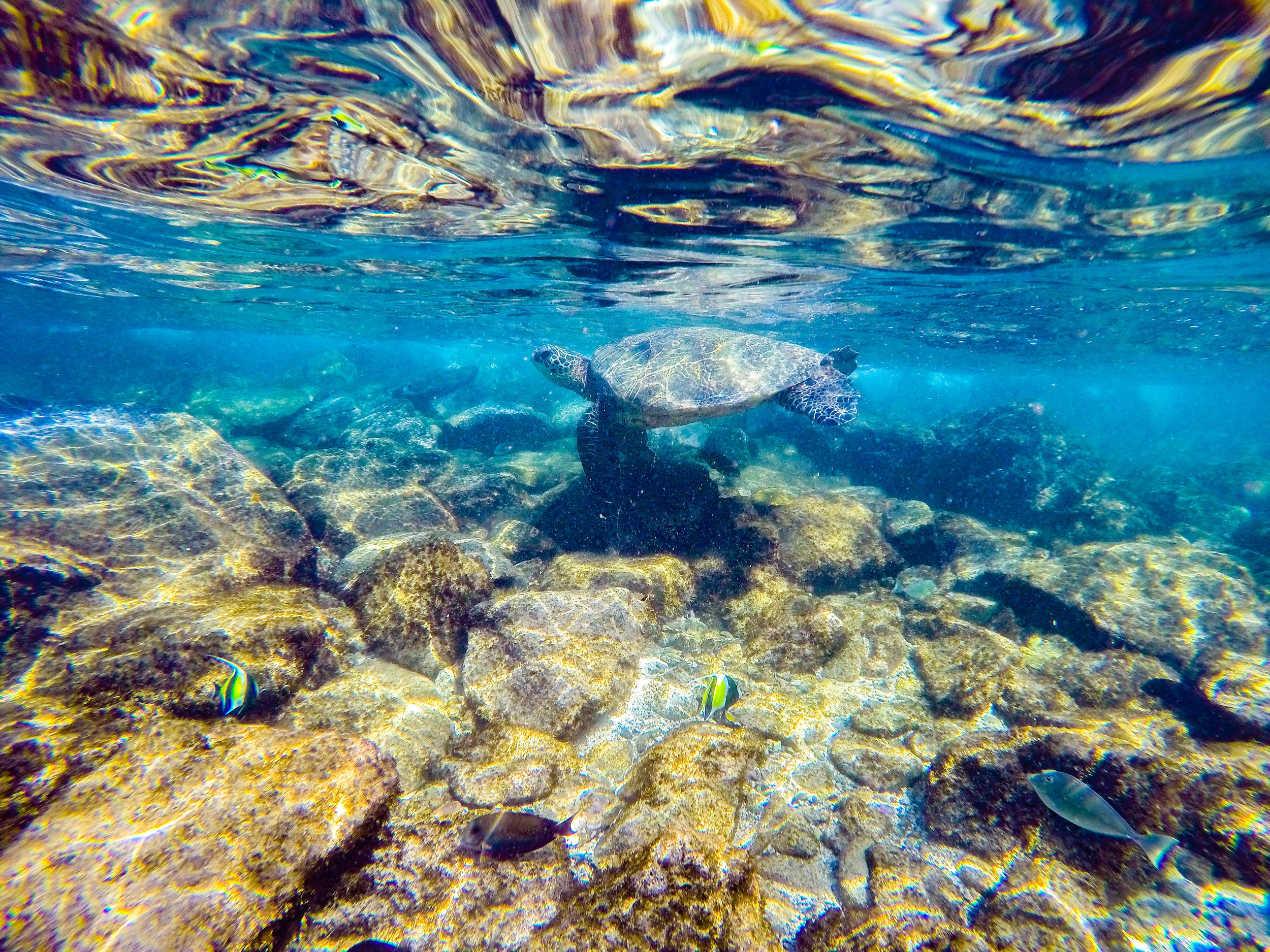 MAUI HAWAII- Snorkeling Kapalua Bay