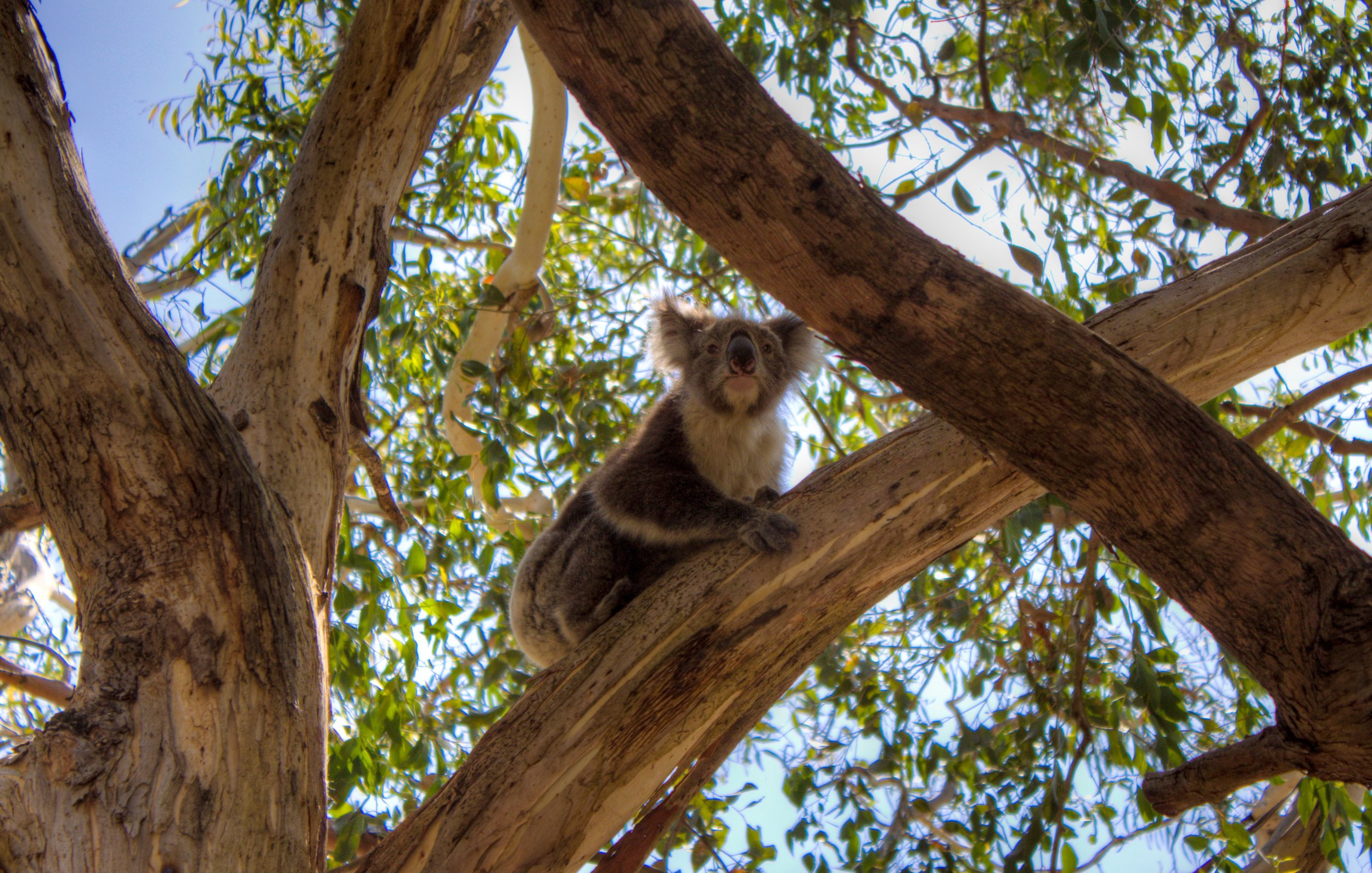 Australia - How to see the cutest creatures down under!