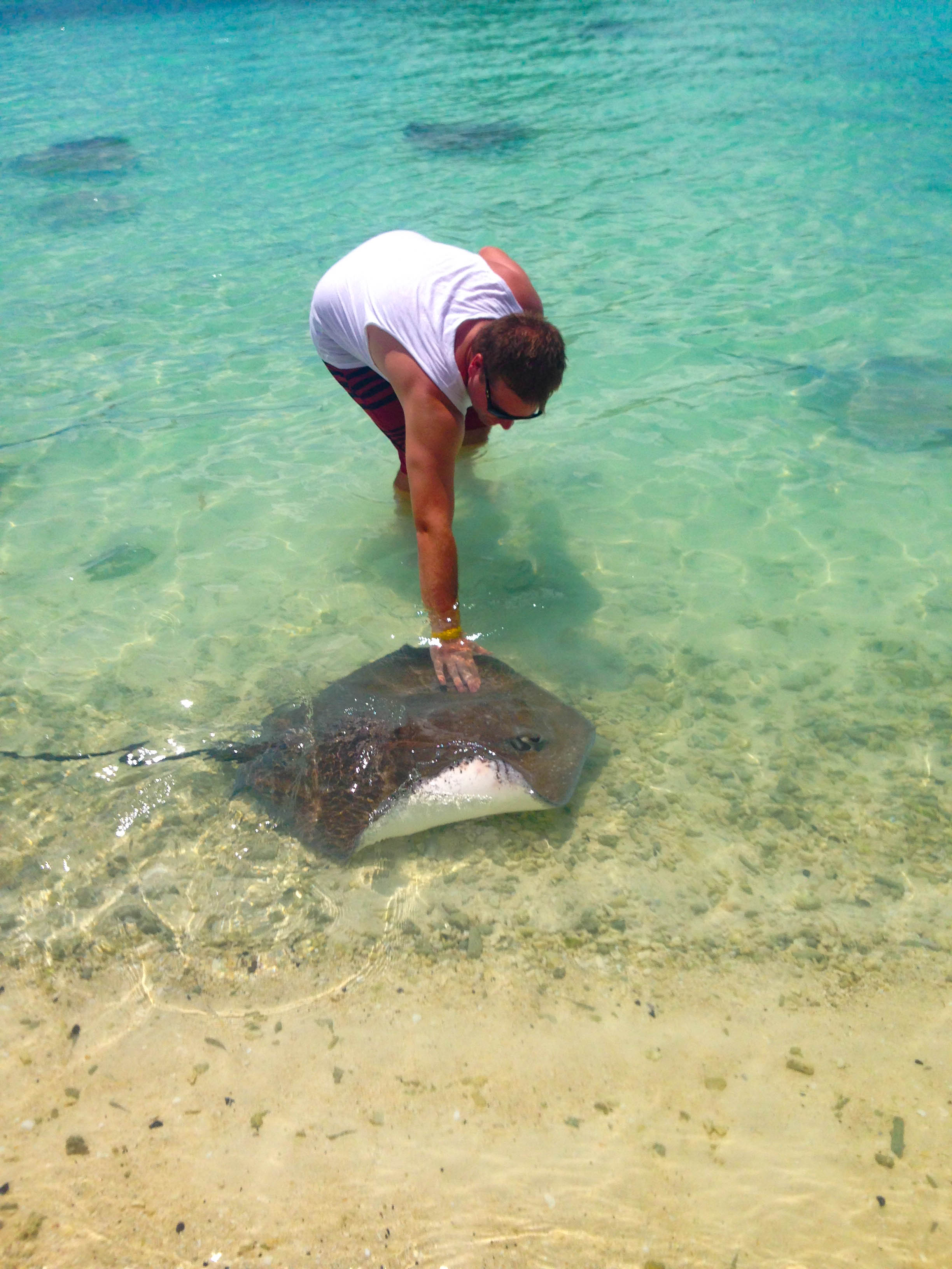 Feed Stingrays in Bora Bora French Polynesia Tahiti