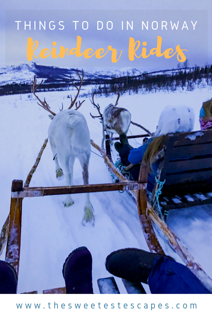 Things to do in Norway_Reindeer Rides.png