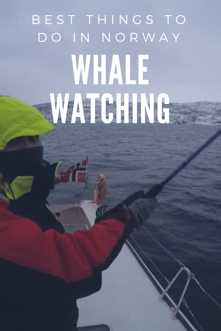 Whale Watching in Tromsø, Norway.png
