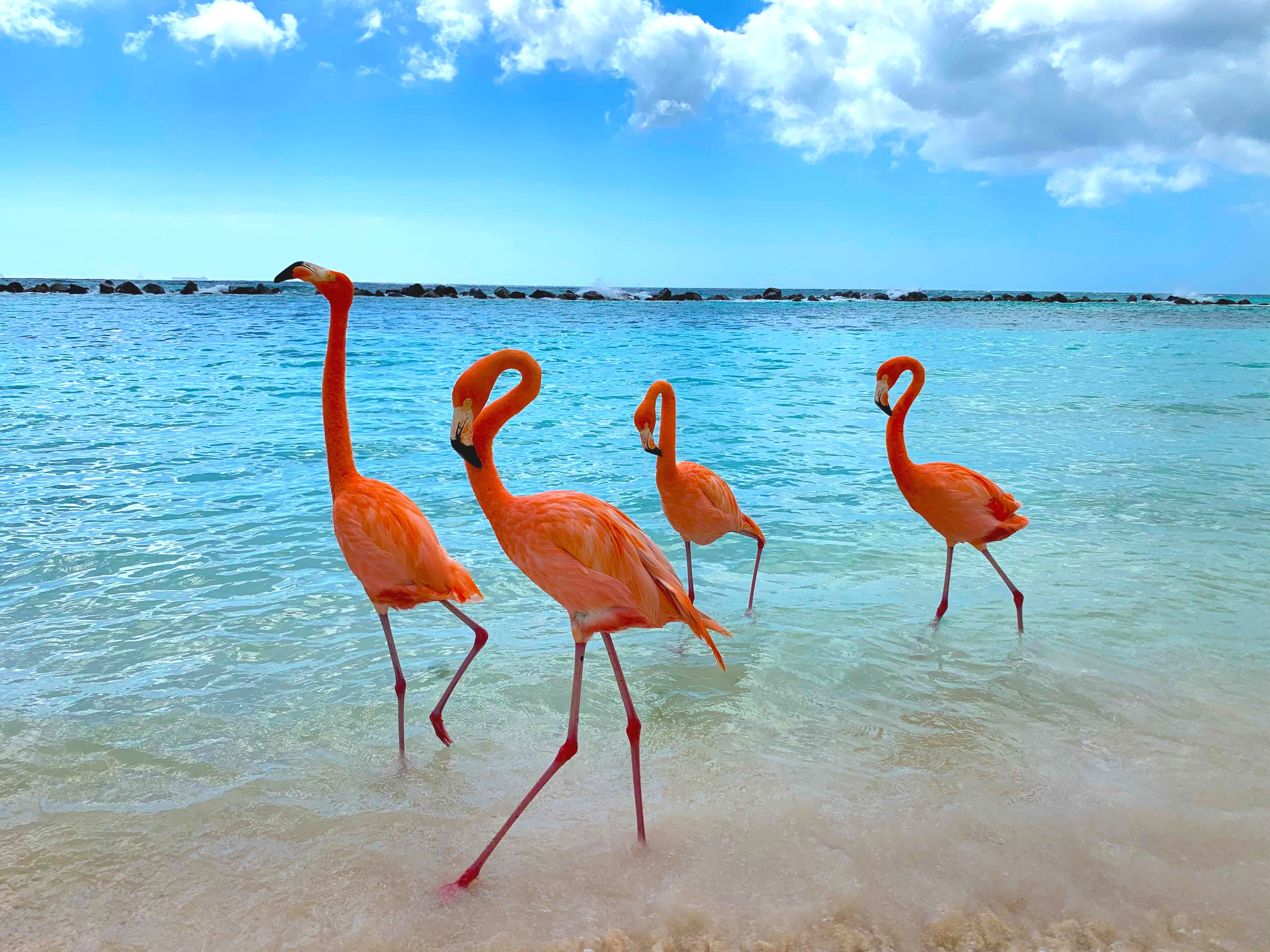 Flamingos on Flamingo Beach - Renaissance Island