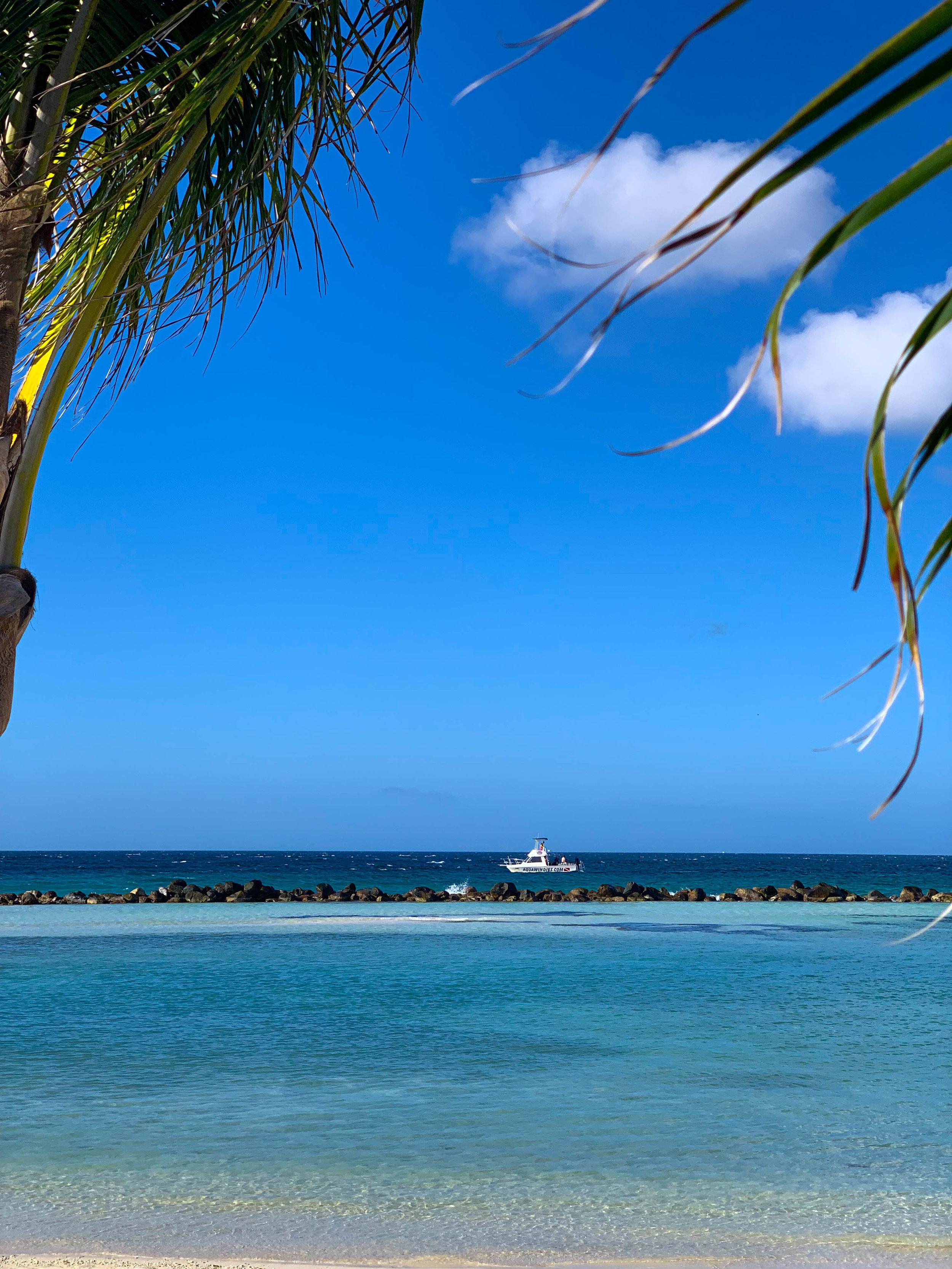 Aruba-Flamingo-Island_Iguana_Beach.jpg