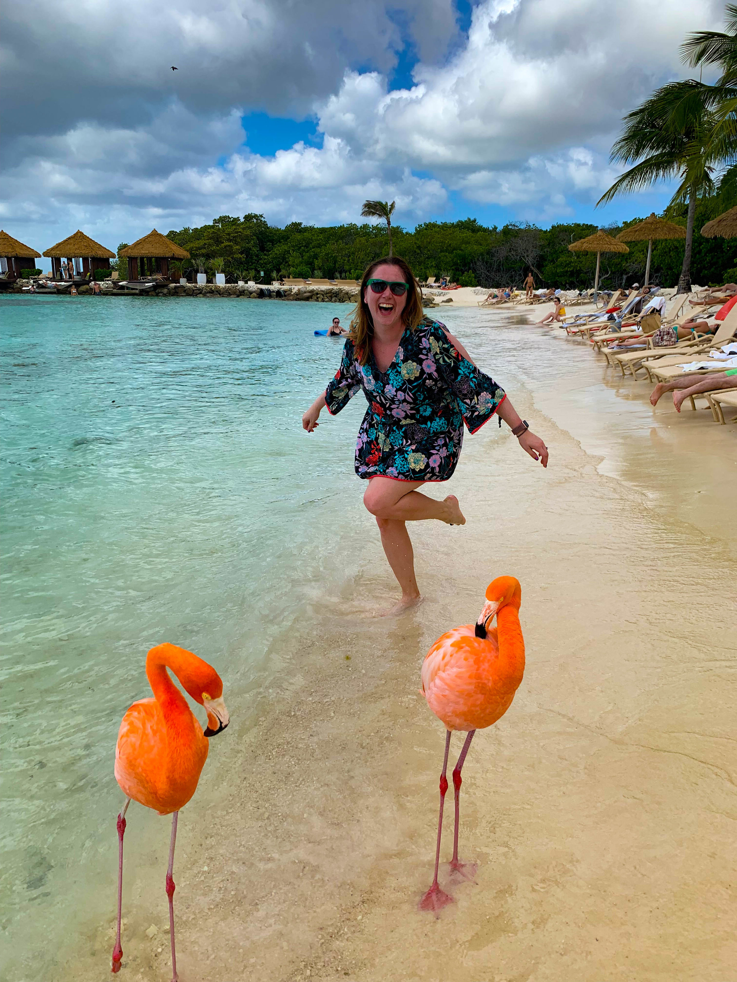 Flamingo Beach - Everything you need to know to visit these pink beauties!