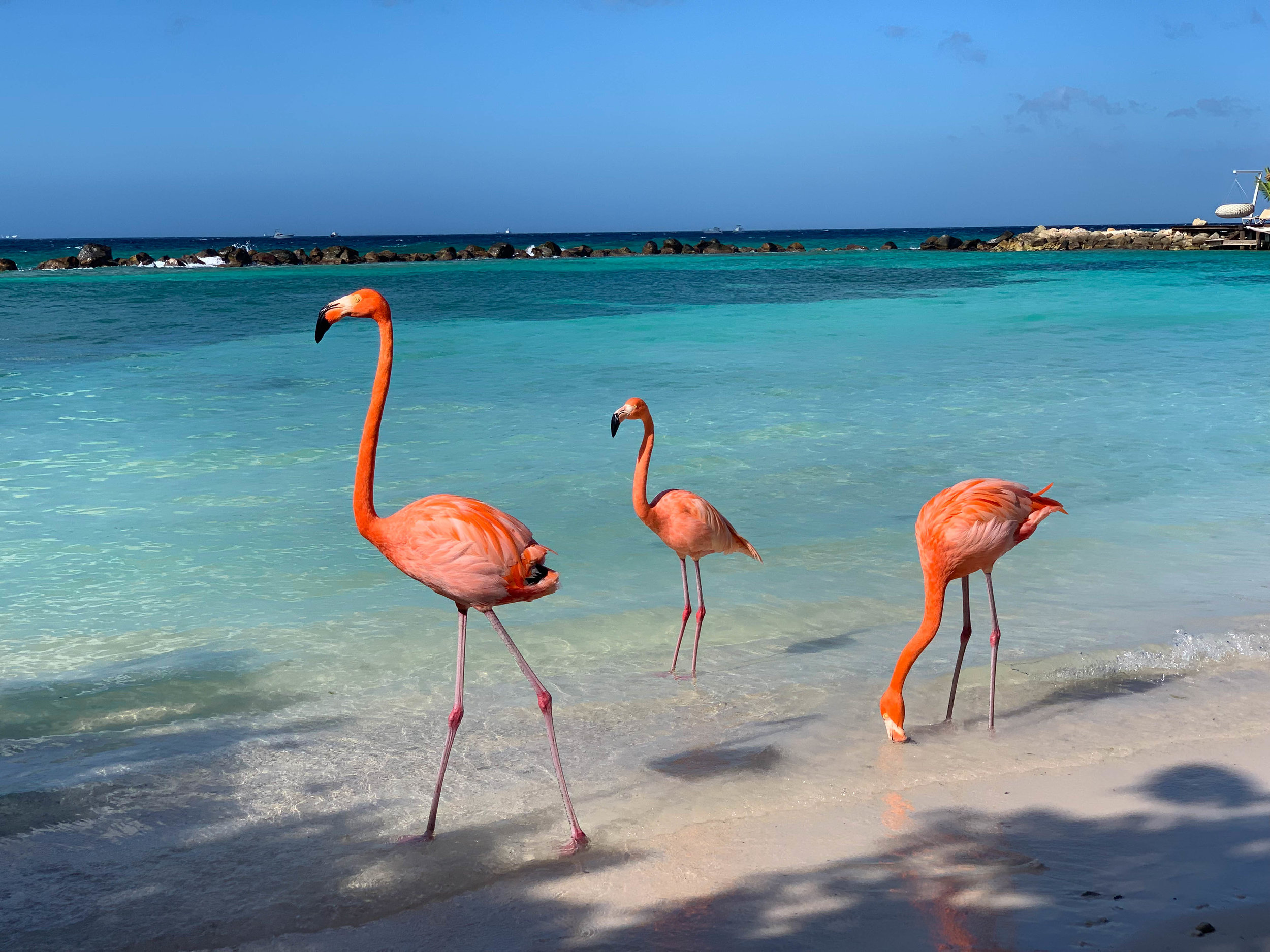 Flamingo Beach on Renaissance Island