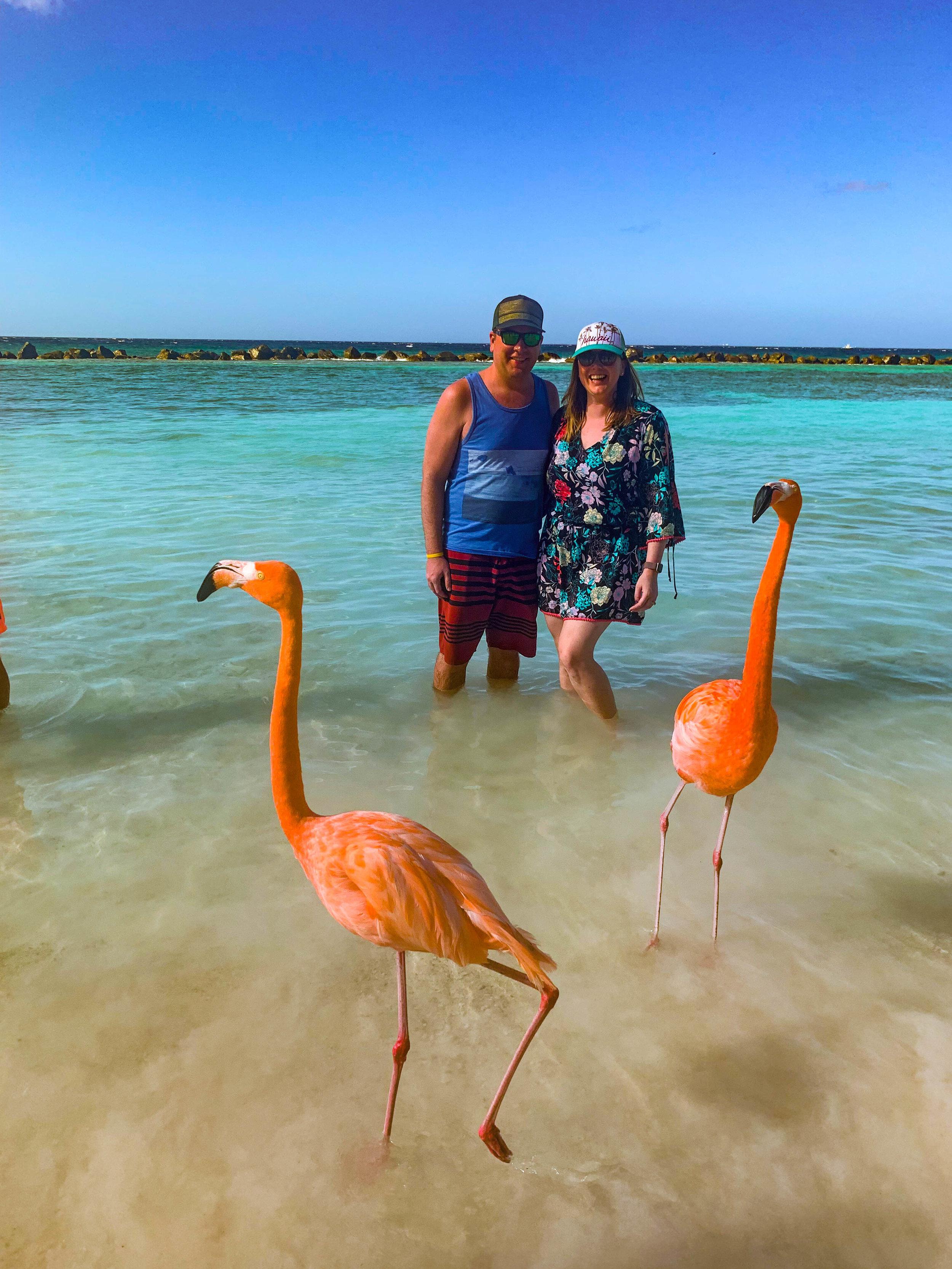 Aruba_Flamingo_Renaissance_Island.jpg