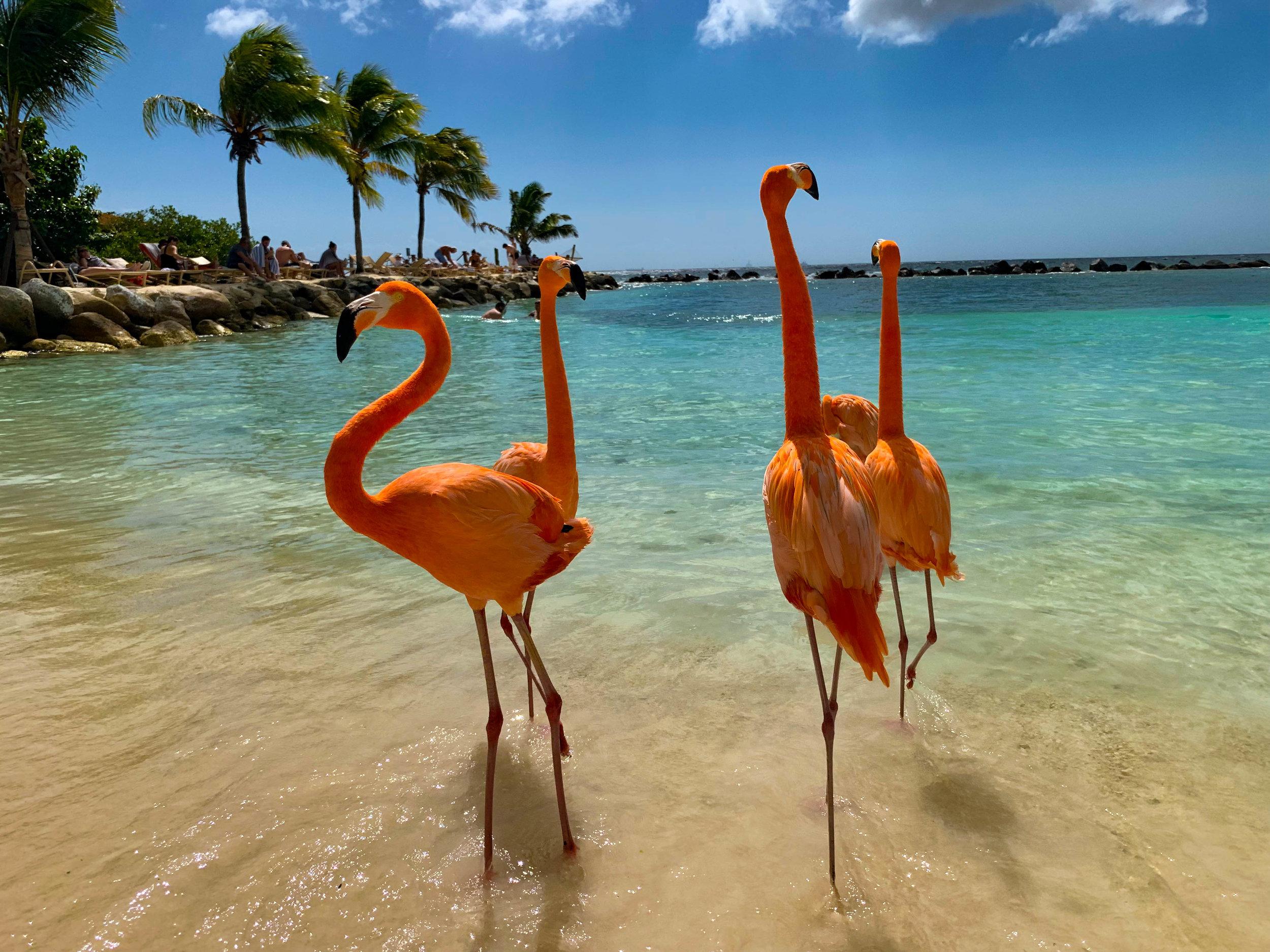 Renaissance Island - Flamingo Beach