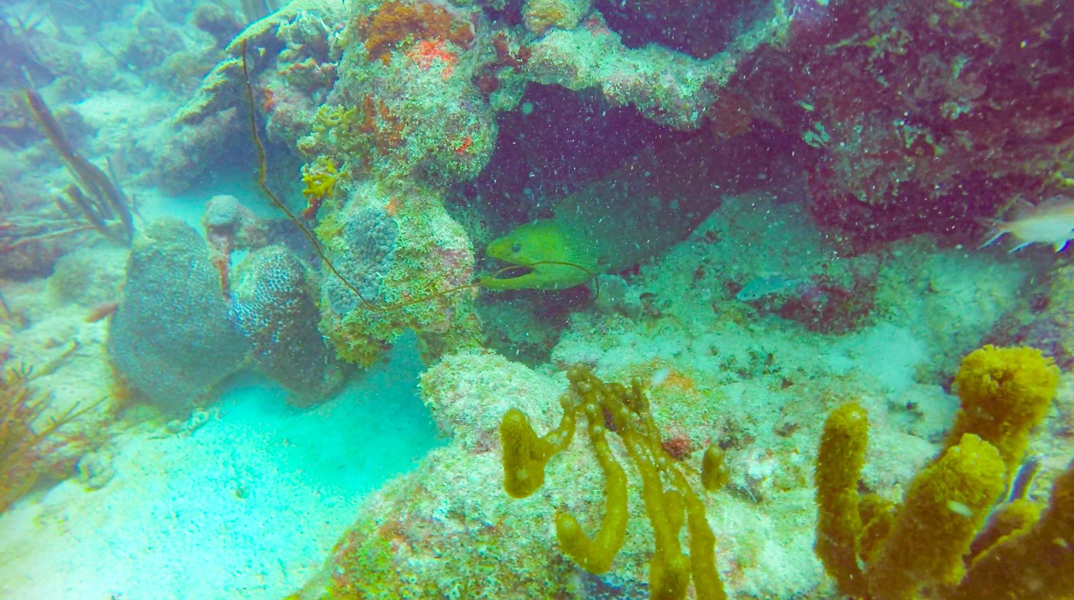 Scuba_Aruba_Aqua_Windies_eel