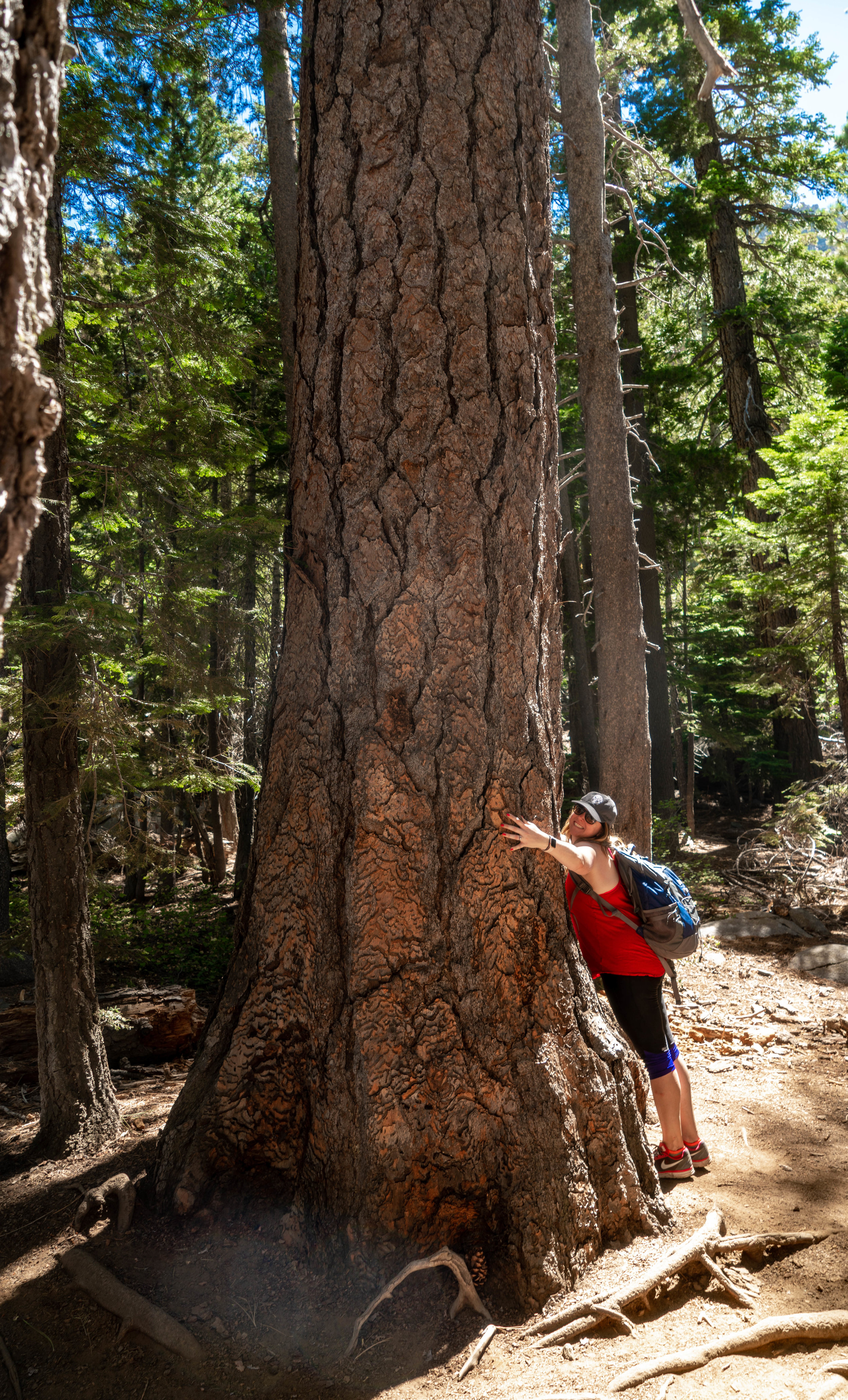 Lake Tahoe Eagle Falls Trail Guide