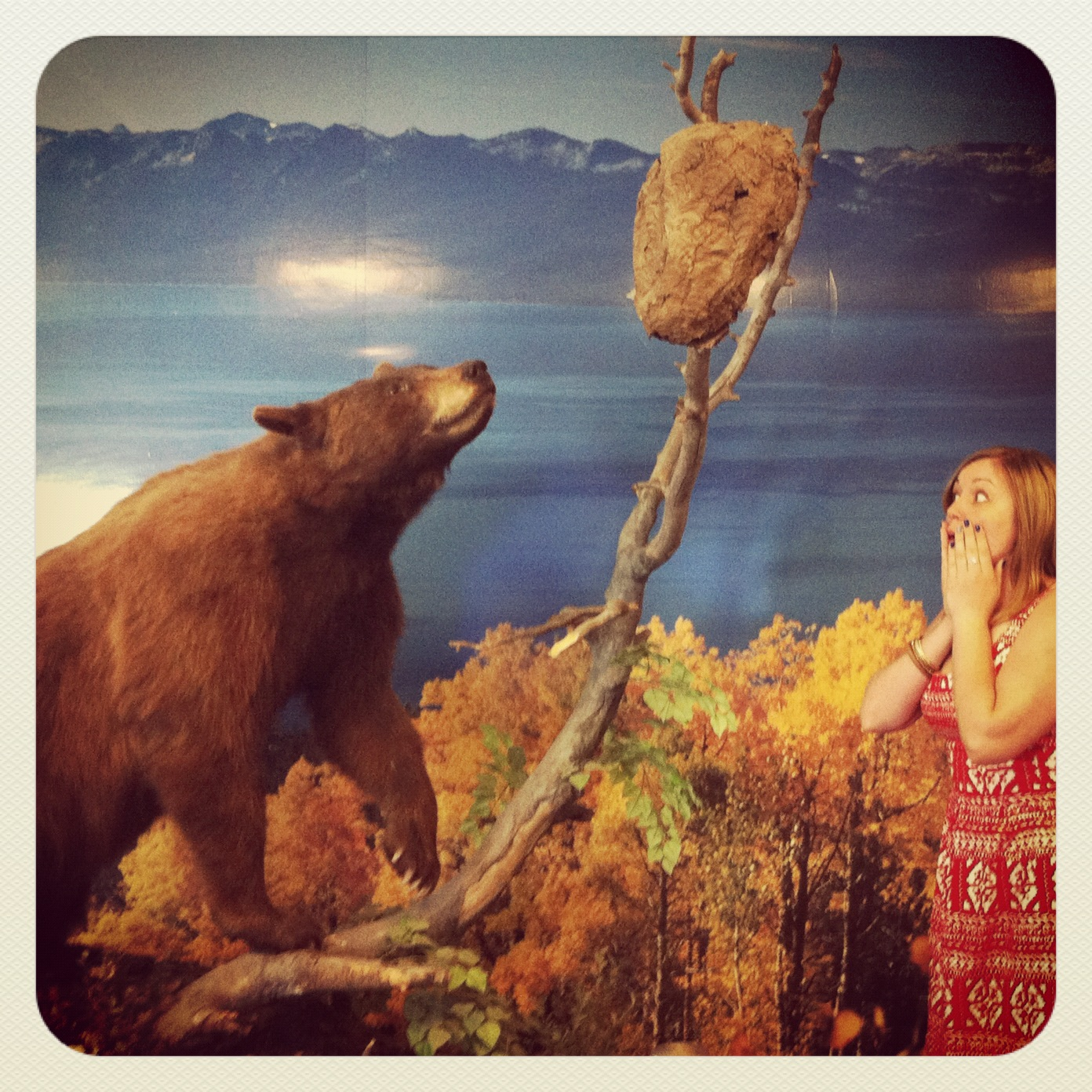 Reno-Tahoe International Airport (watch-out for bears)