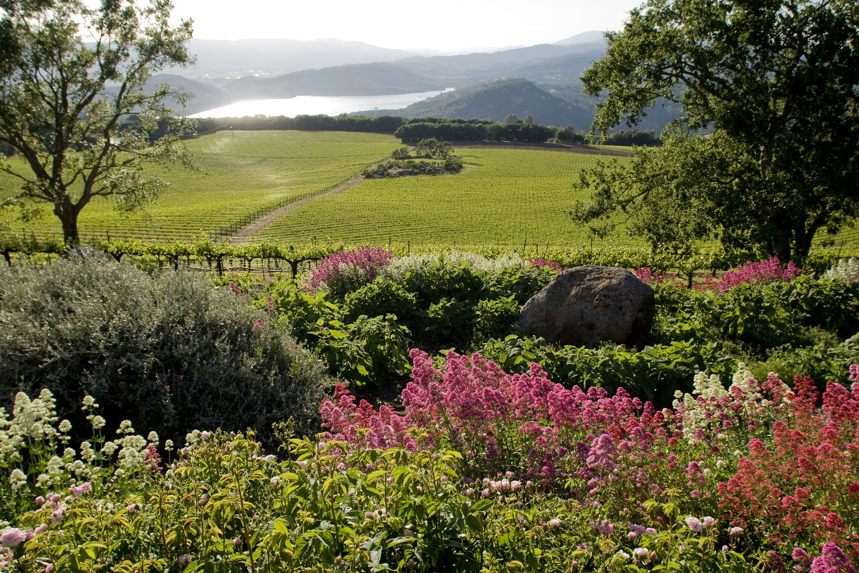 Chappellet's vineyard on Pritchard Hill from the midst of Molly Chappellet's garden! Photo Courtesy of Chappellet