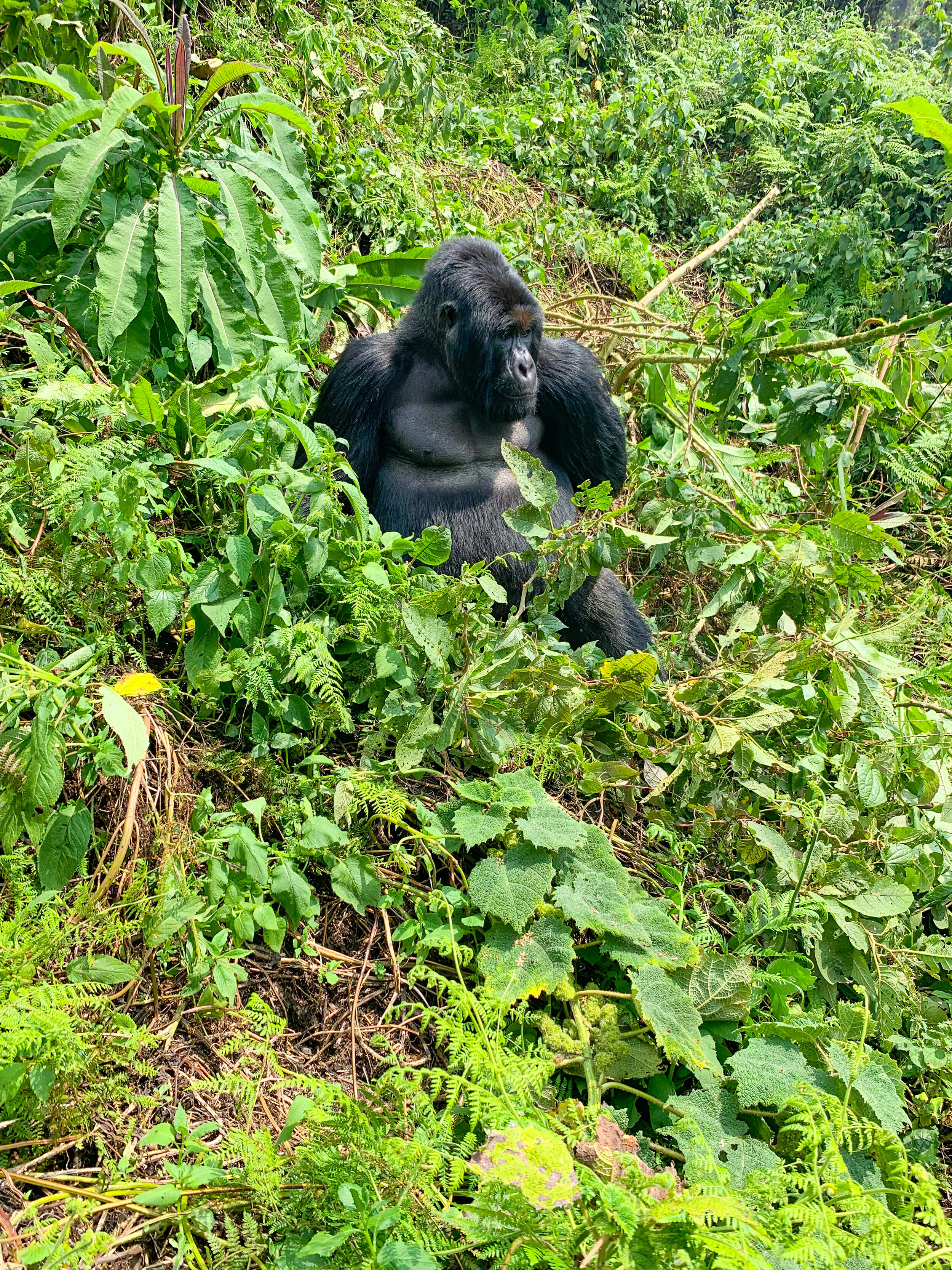 Africa_Rwanda_Gorilla_trek-35.jpg