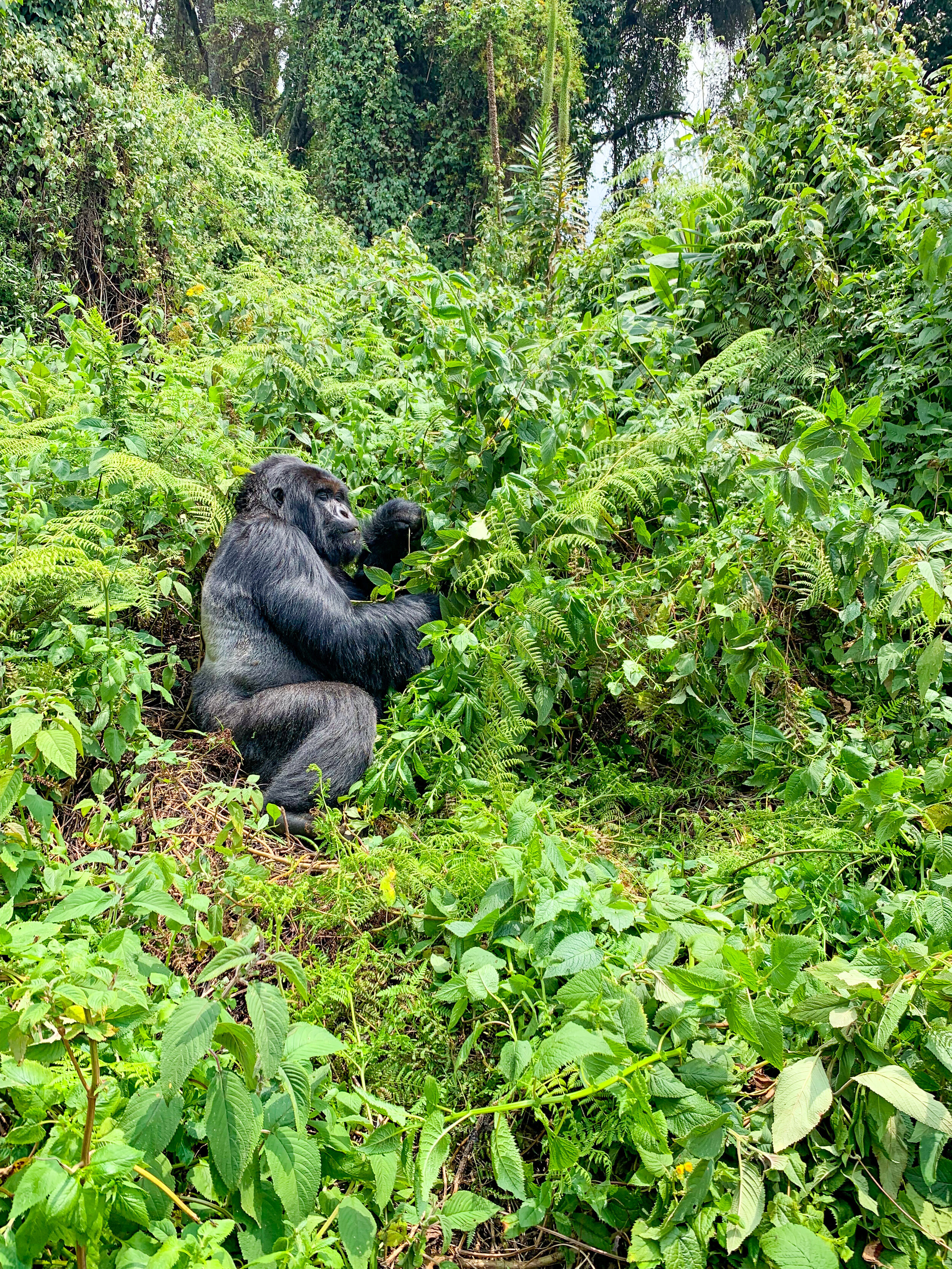 Africa_Rwanda_Gorilla_trek-32.jpg
