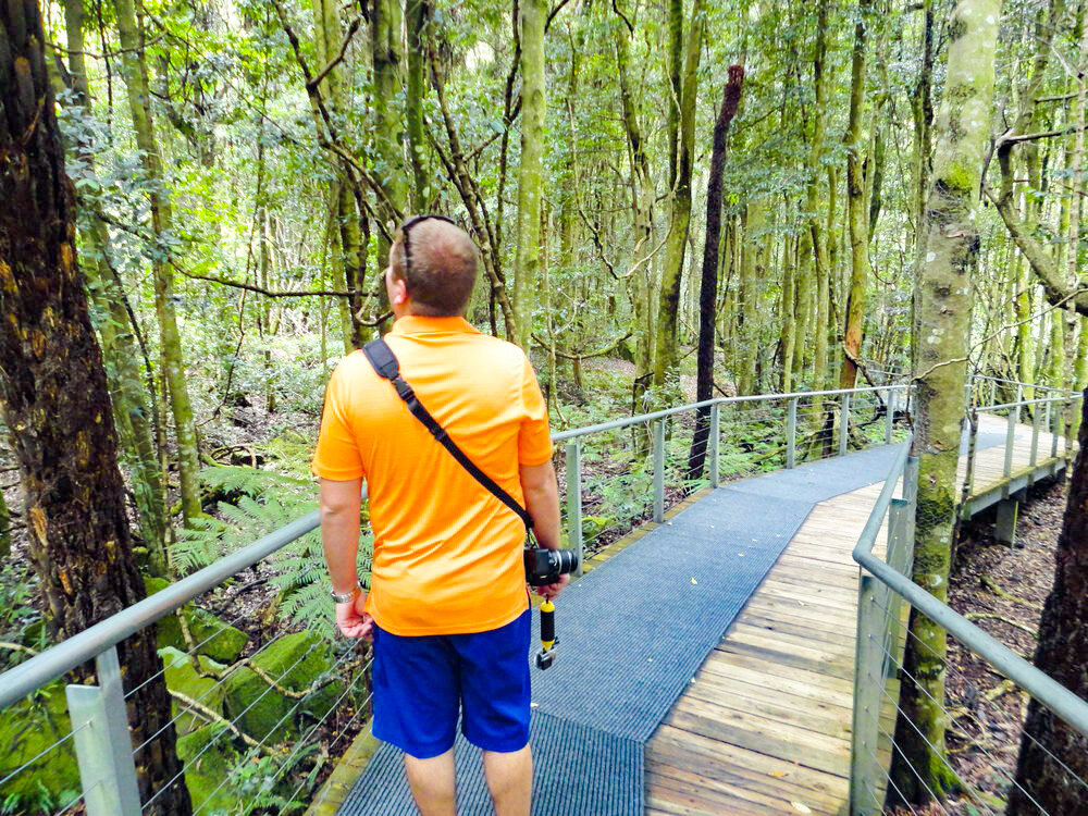 Scenic World Sydney Australia Rainforest Trail