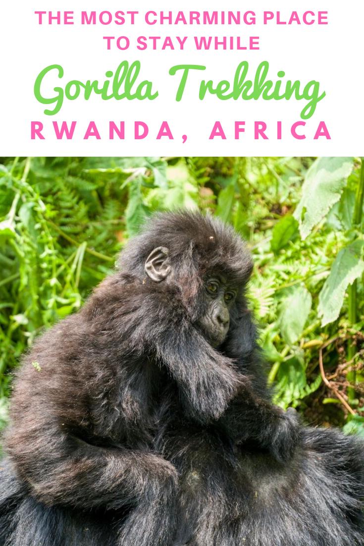 Virunga_Lodge_Rwanda_Africa.png
