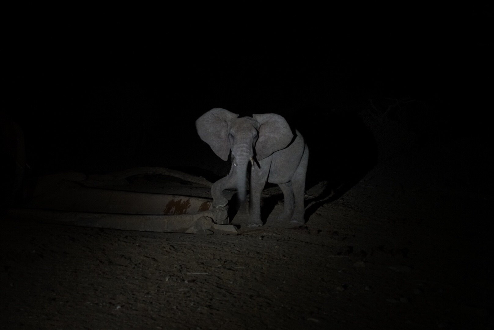 Elephant at the water hole at night