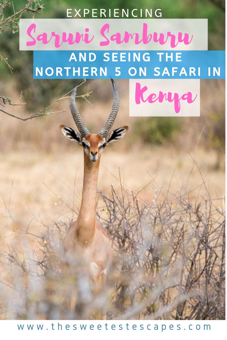 Saruni Samburu and the Northern Five in Kenya.png