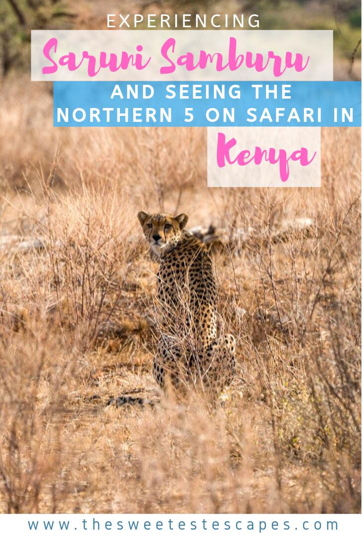 Saruni Samburu and the Northern Five in Kenya