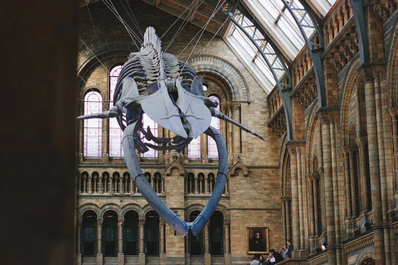 Architecture-London-Design-Freehaus-Studies-Natural-History-Museum-1.jpg