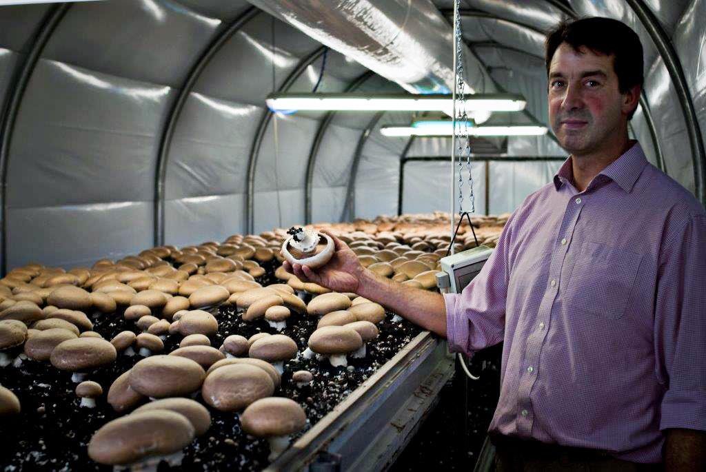 Mushroom 2-18.jpg