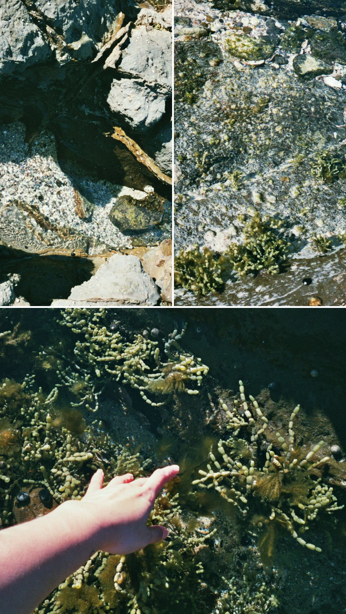 The textures and colours in the rockpools