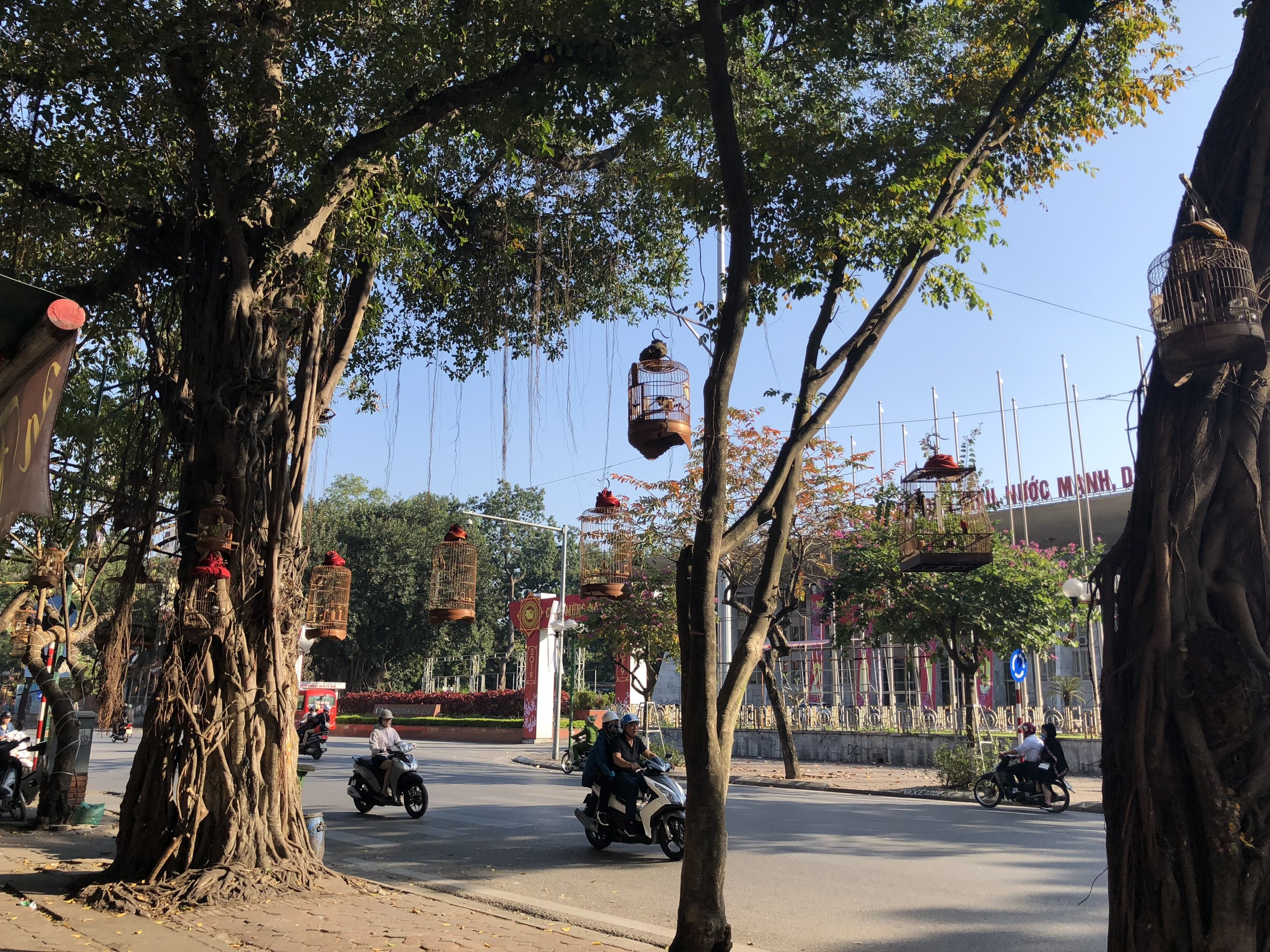 A great example of a Hà Nội street: motorbikes, beautiful trees, and the occasional bird in a cage.