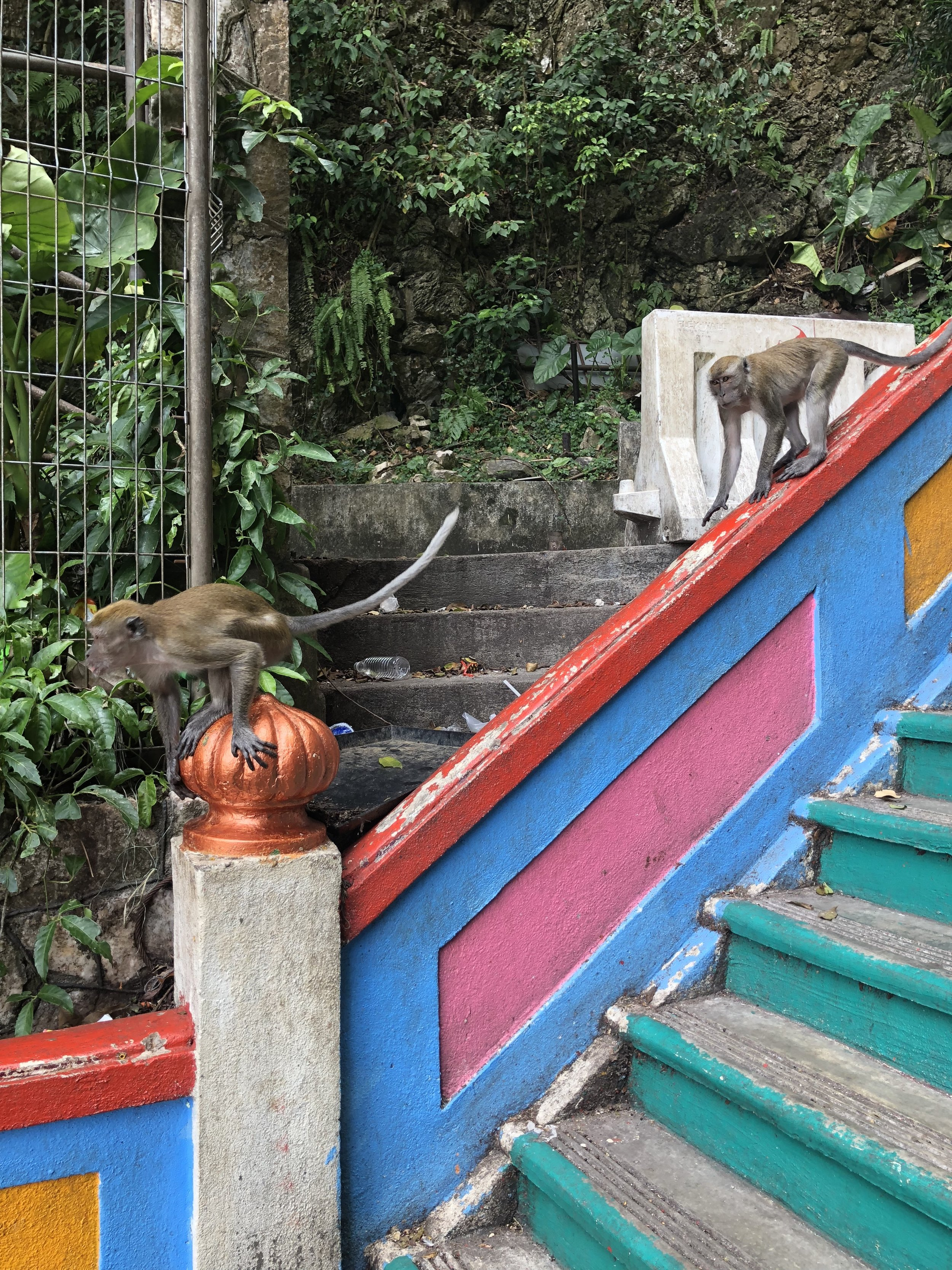 On the way up the stairs, I got a quick snapshot of the macaques running down the stairs!