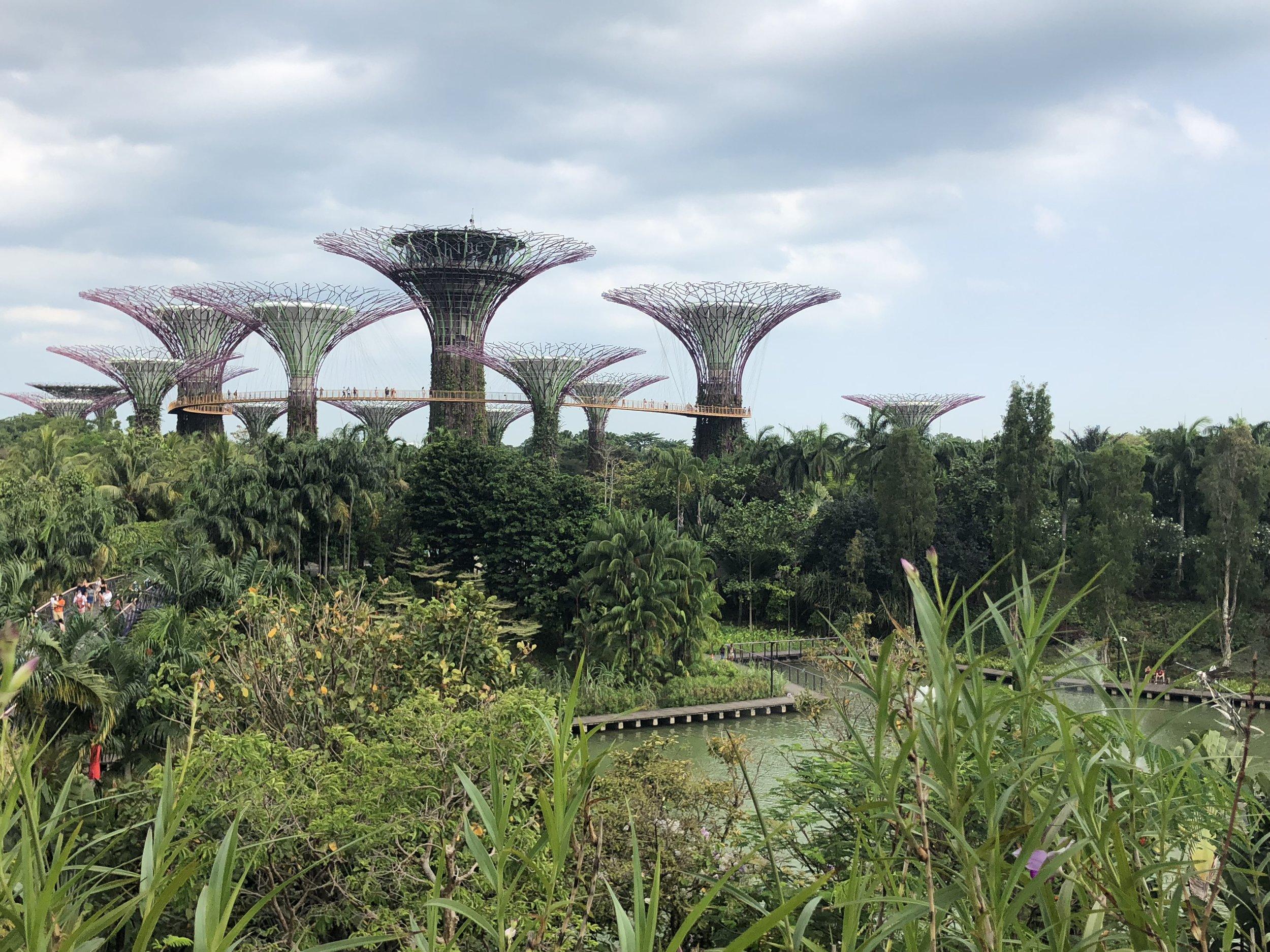 ¡Gardens By the Bay! Una vista muy linda. Me fascina como puede haber un bosque a lado de un centro comercial lujo como Marina Bay Sands.