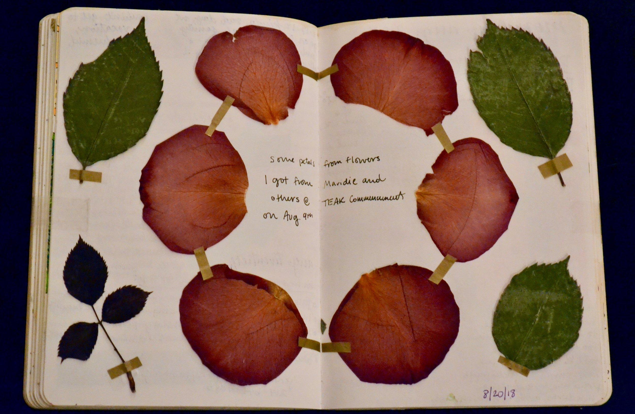 Me gusta colectar flores y hojas para presionarlos y tenerlos para siempre. Los diarios sin lineas me dejan decorar mi diario cualquier manera que me gusta.