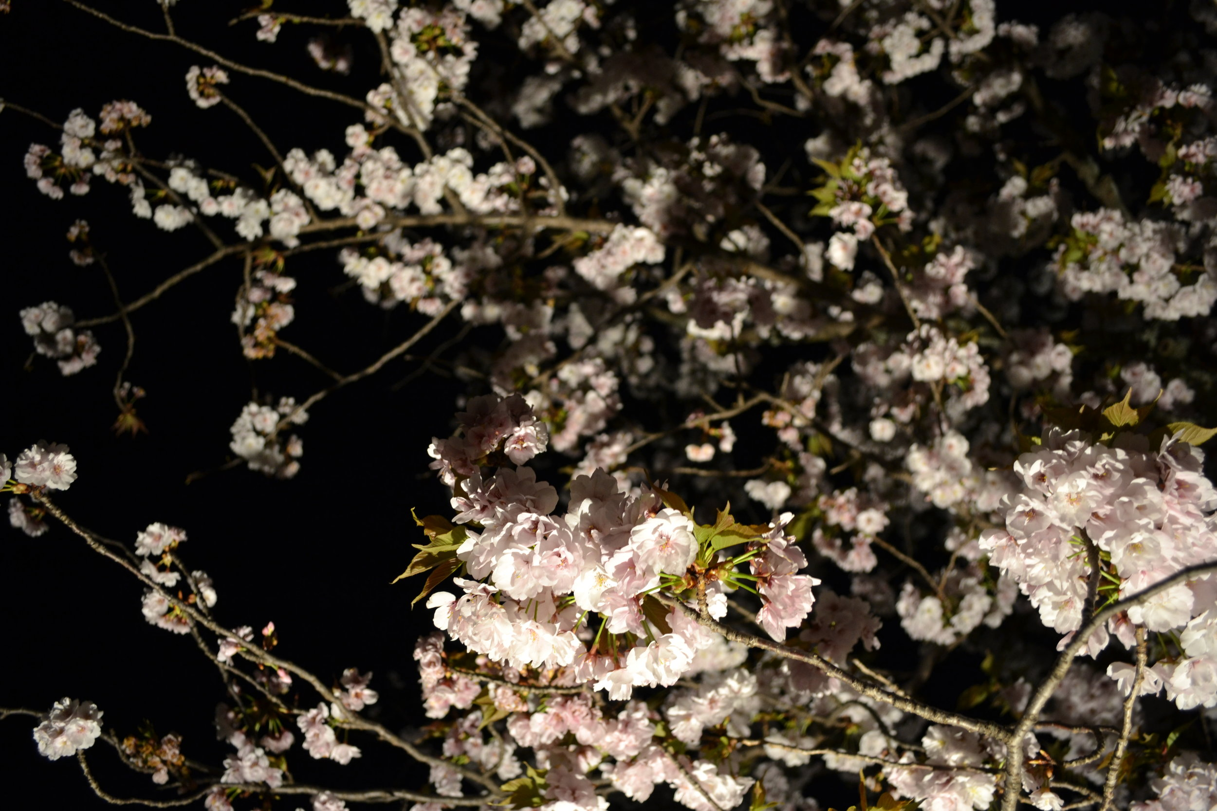 One final look of the cherry blossoms up close. I know that this post is about castles, but if the people who used to live and work here also got to see all of these flowers, then in some way I am walking through where they used to walk through too.