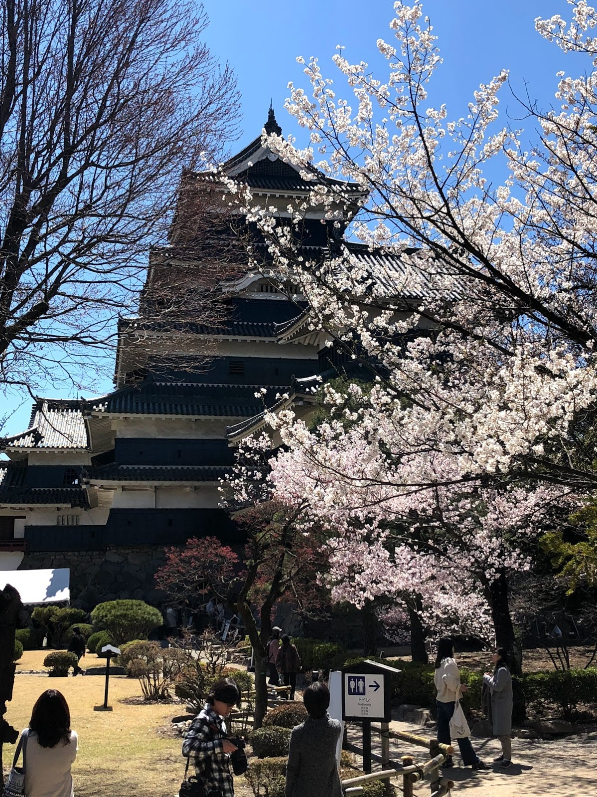 It was great to see the castle during cherry blossom season.