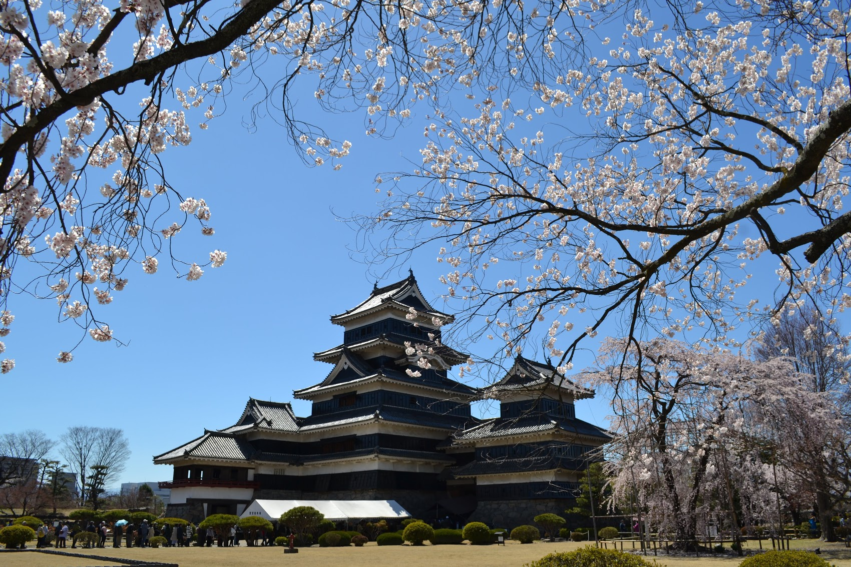 There were a whole lot of cherry blossoms surrounding the grasses of the main keep. It was nice to stand under the shade of the trees to see Matsumoto Castle on a very sunny day.