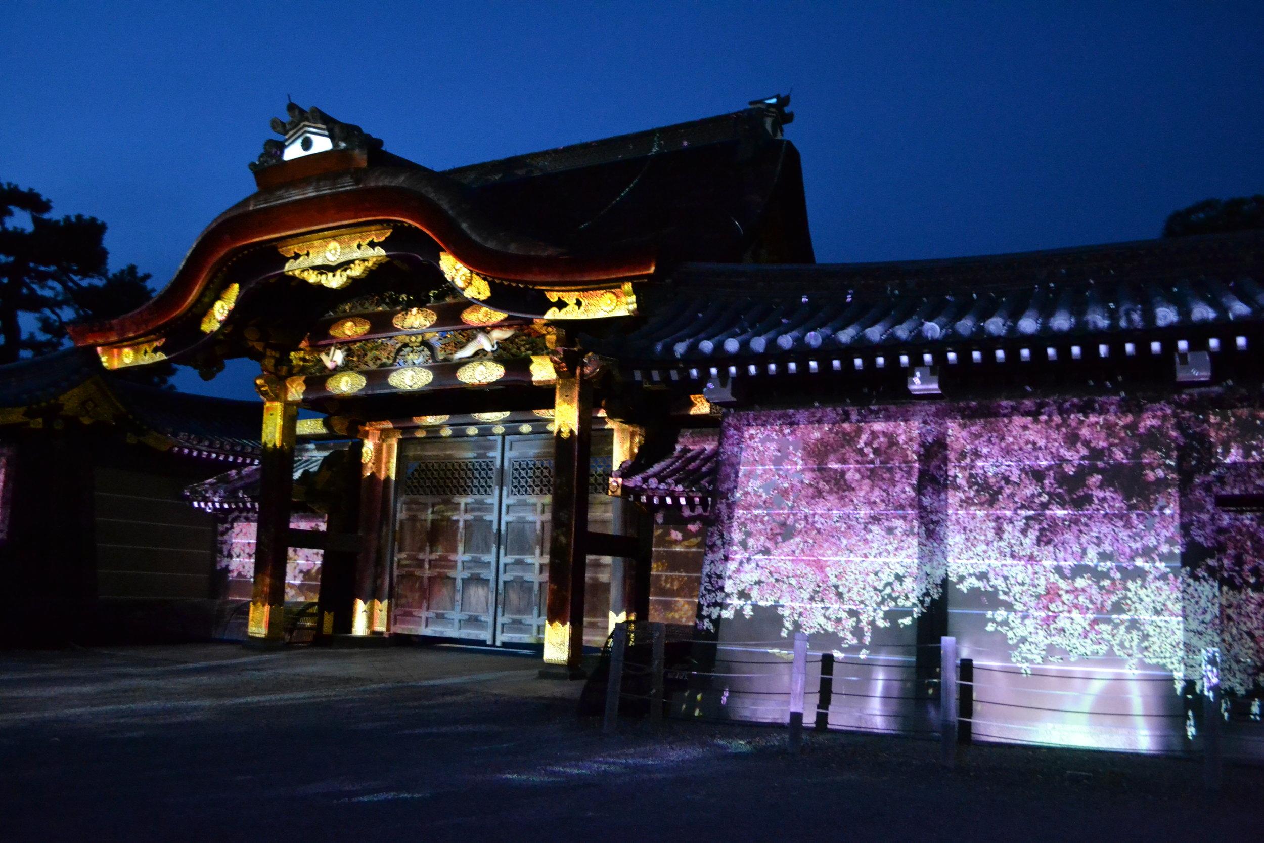 El show de luces termina con unos imagenes lindas de las  sakuras .