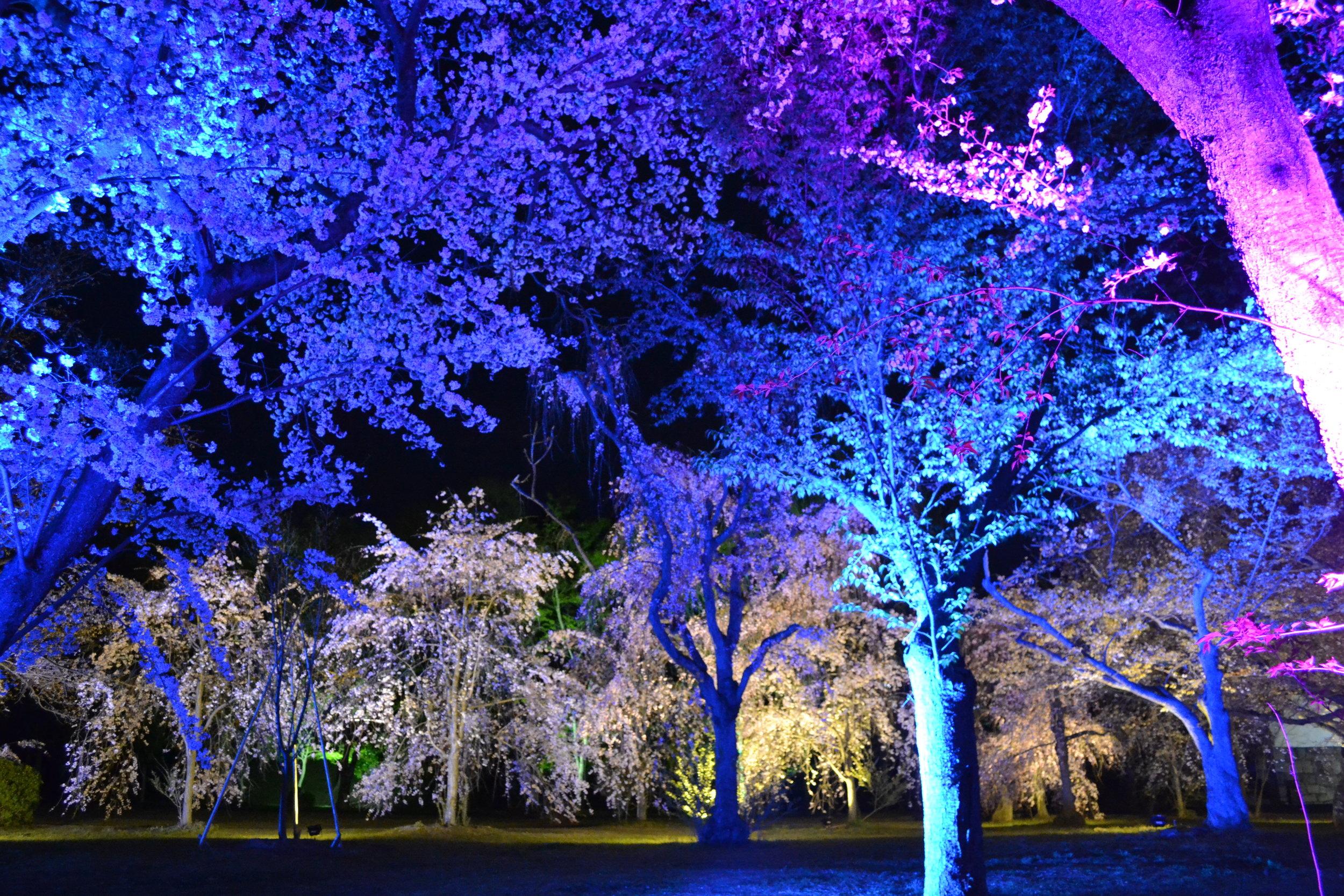 ¡También habían luces de diferentes colores! Se parece como un bosque de cuentos de hadas.