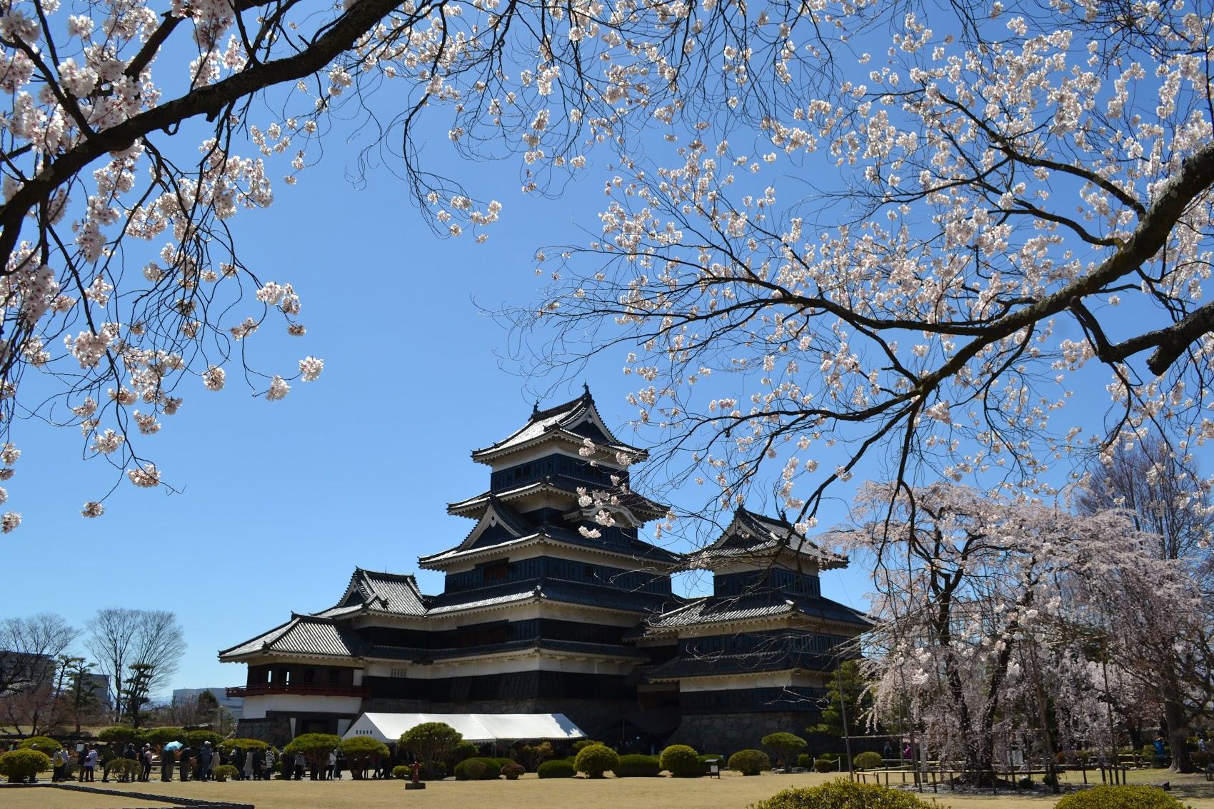Habían muchos arboles de  sakura  alrededor del castillo, y pude tomar muchas fotos de lejos.