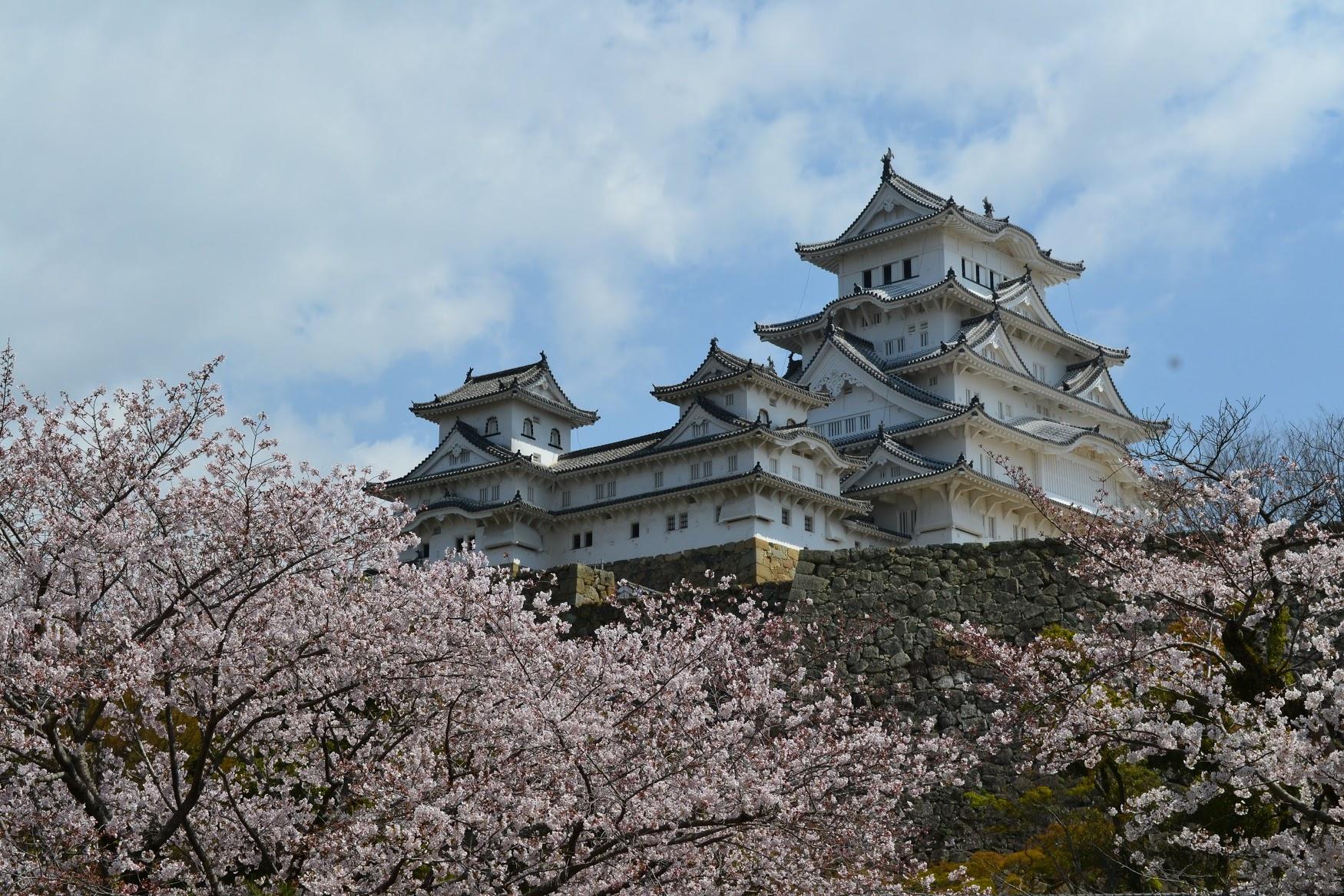 Había que caminar mucho para llegar a la entra principal del Castillo Himeji. Aunque había que caminar mucho, también había muchas flores de  sakura  para ver.