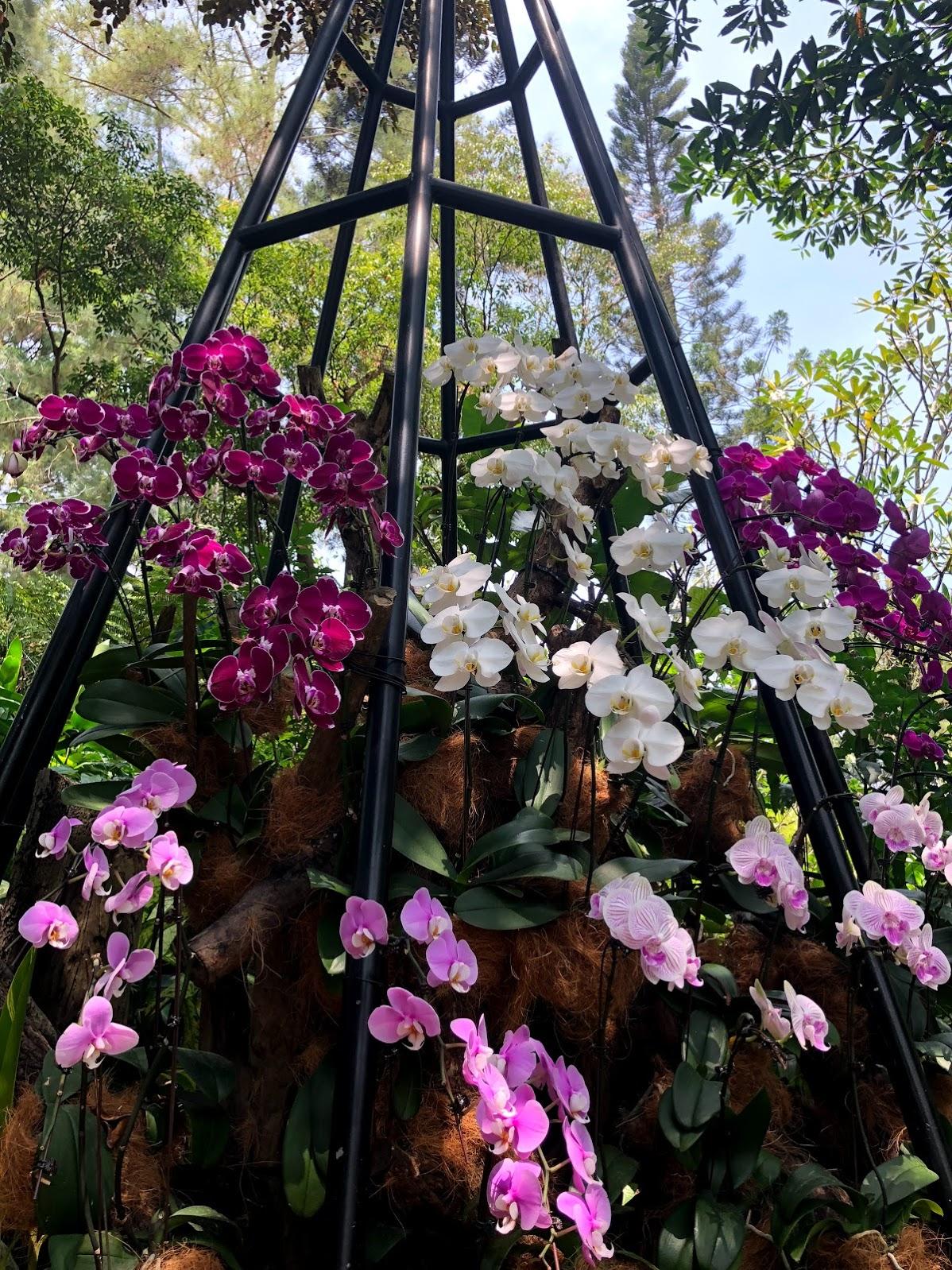 Pude ver a las orquídeas de cerca en el jardín de orquídeas.