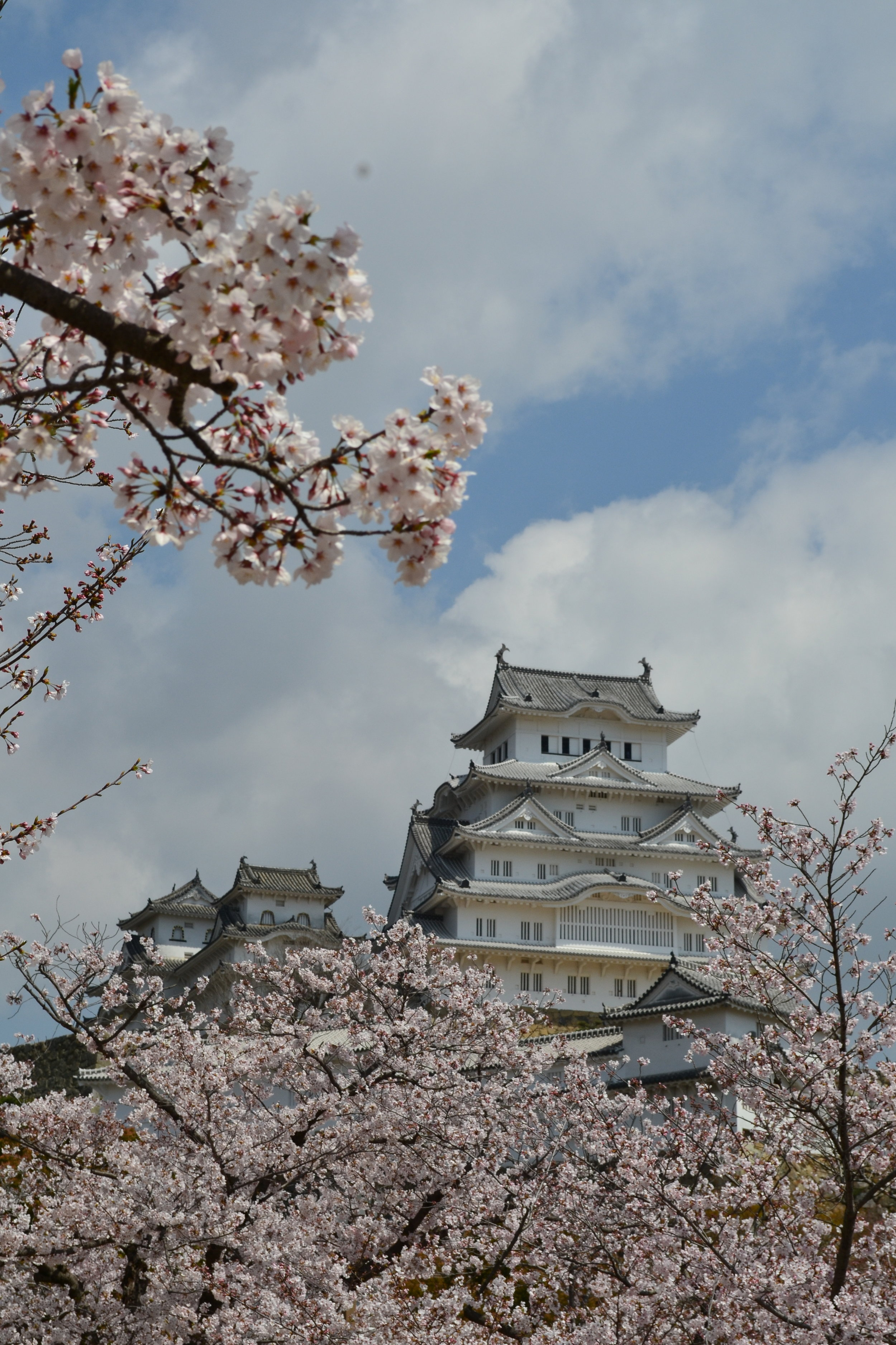 During peak season, these cherry blossoms can make anything look good. With the impressive Himeji Castle behind, there is no better sight in Himeji!