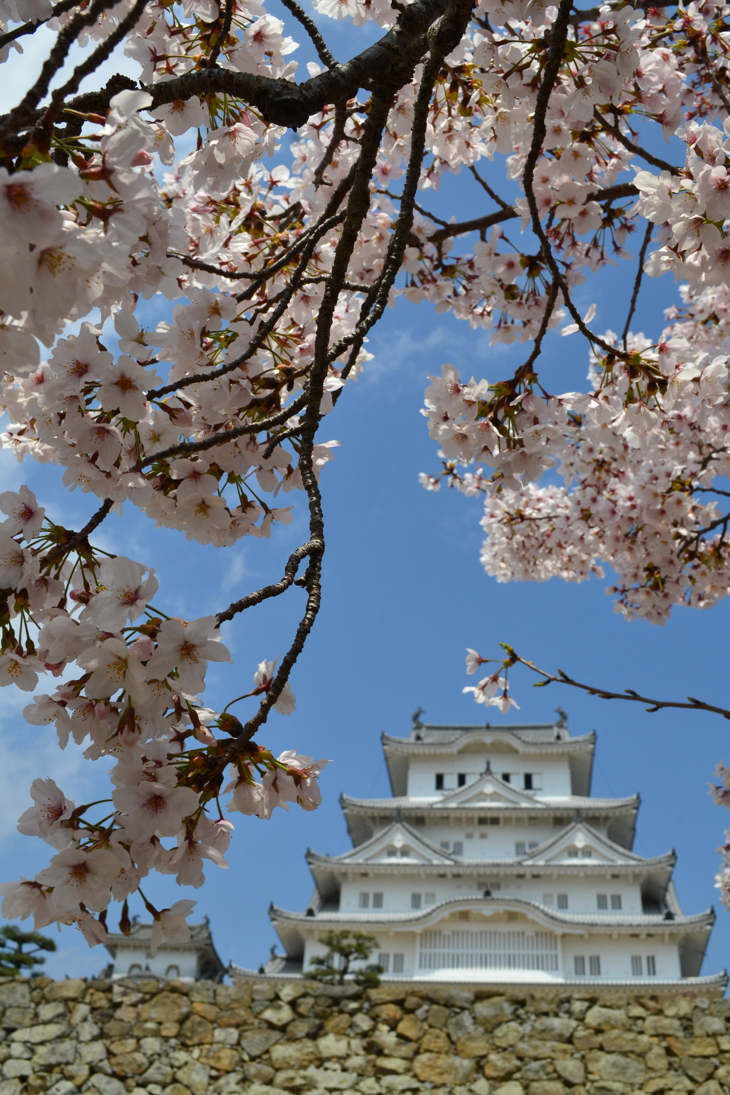 Another look at the castle but just a little bit closer. Aren't the cherry blossoms gorgeous?