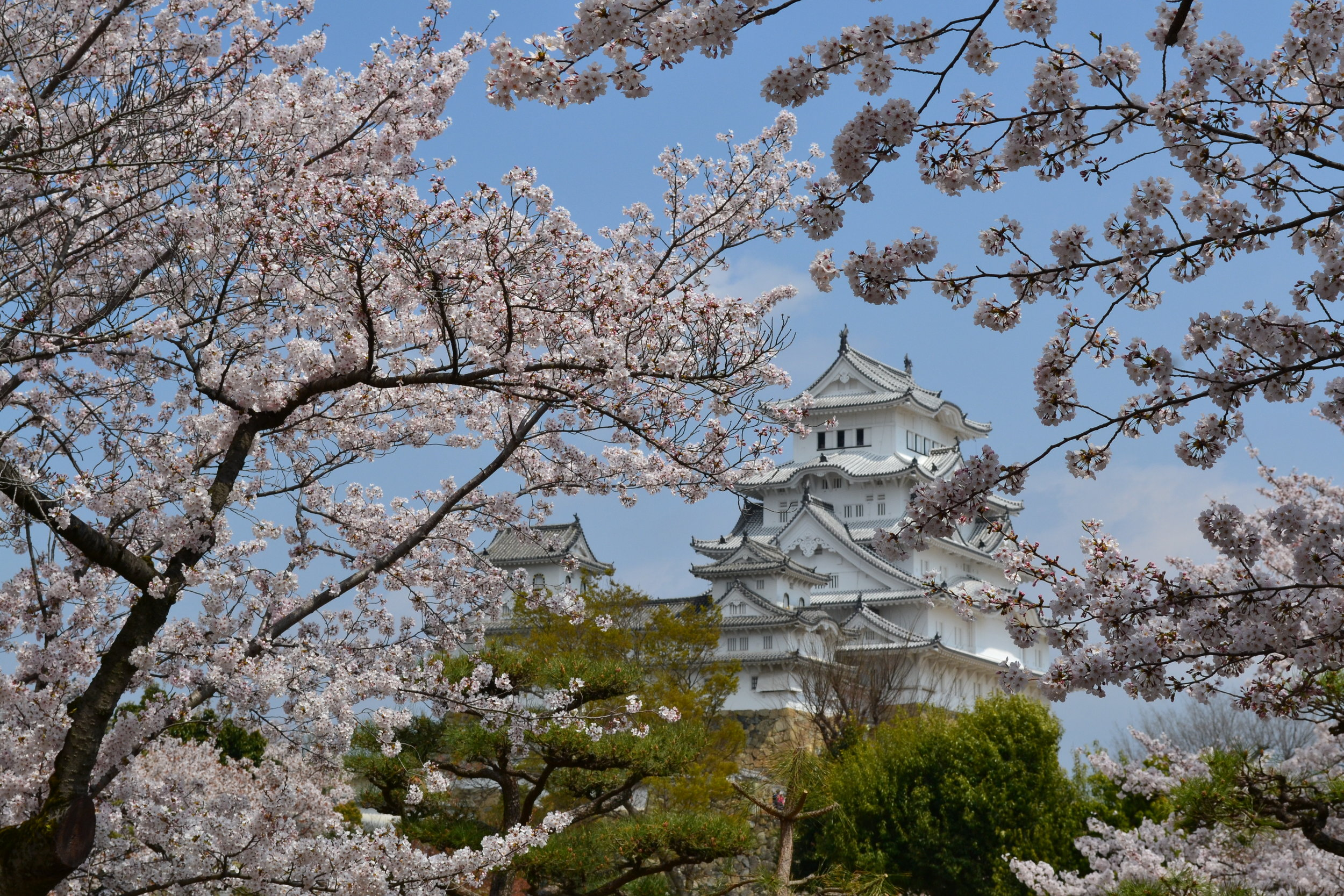 Finally, a look at Himeji Castle from the cherry blossom park next to it. A great trip to make if you're in the Hyogo region of Japan (past cities like Osaka and Kobe).