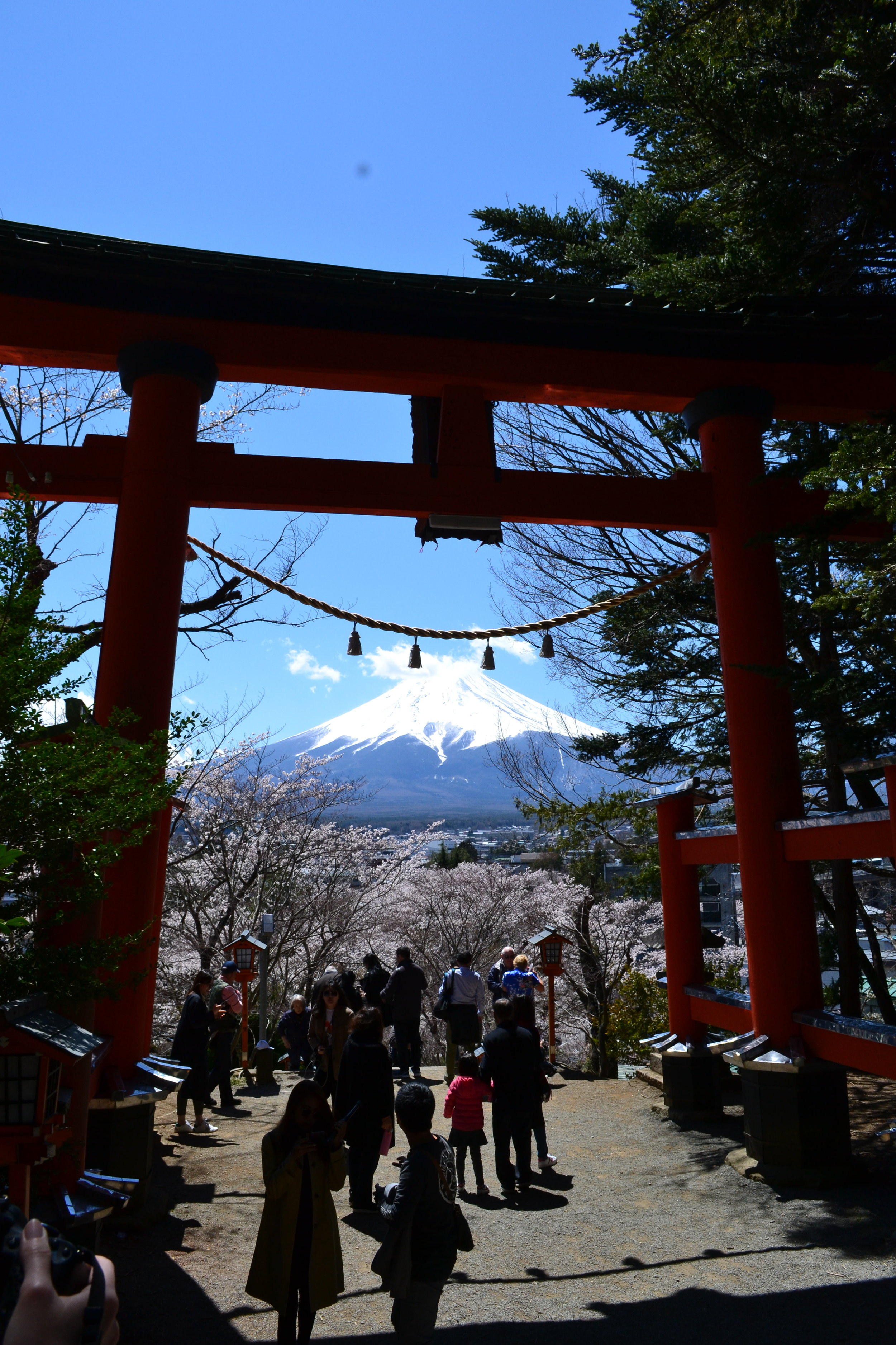 Walking up to the famous Chureito Pagoda you passed through this torii, a Shinto gate indicating the sacred land beyond it. When you turn around, not only can you see the gate but also the cherry blossoms leading up the trail AND Mount Fuji. You can see how many people stopped to snap a picture, like myself.
