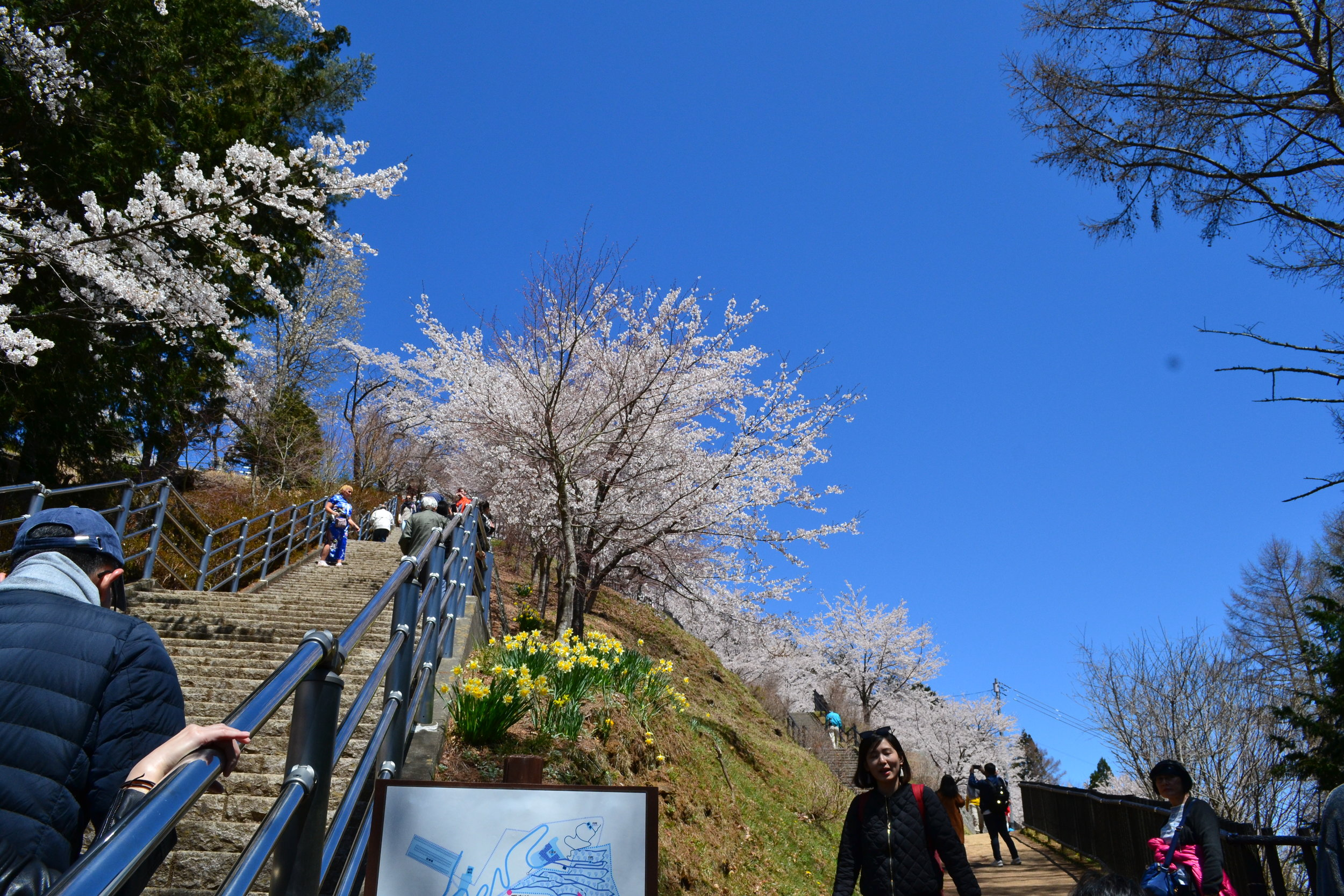 Some of the hike up to the Pagoda. There is a stairway and a more curved trail you can choose to get up to the Pagoda. The stairs are quite steep so I had to take a break one or twice to reach the top. The trail is much easier and is completely lined with cherry blossoms, so I decided to take that route downhill.